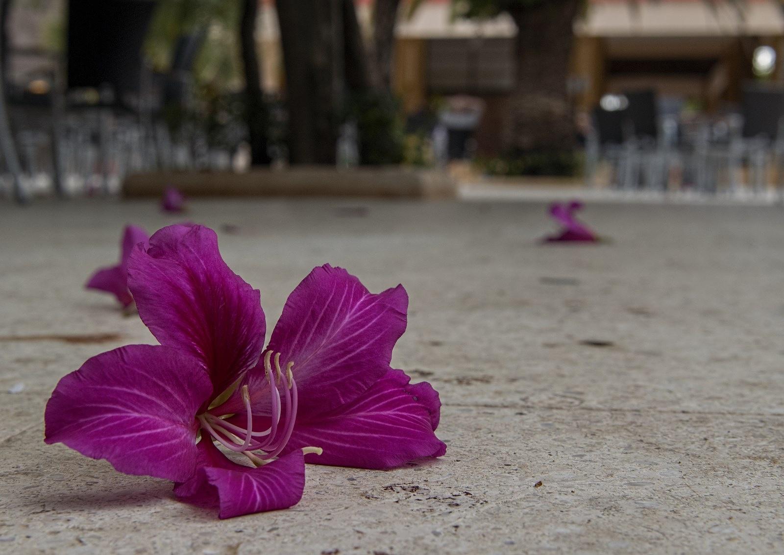 Flowers by Waldemar Sadlowski