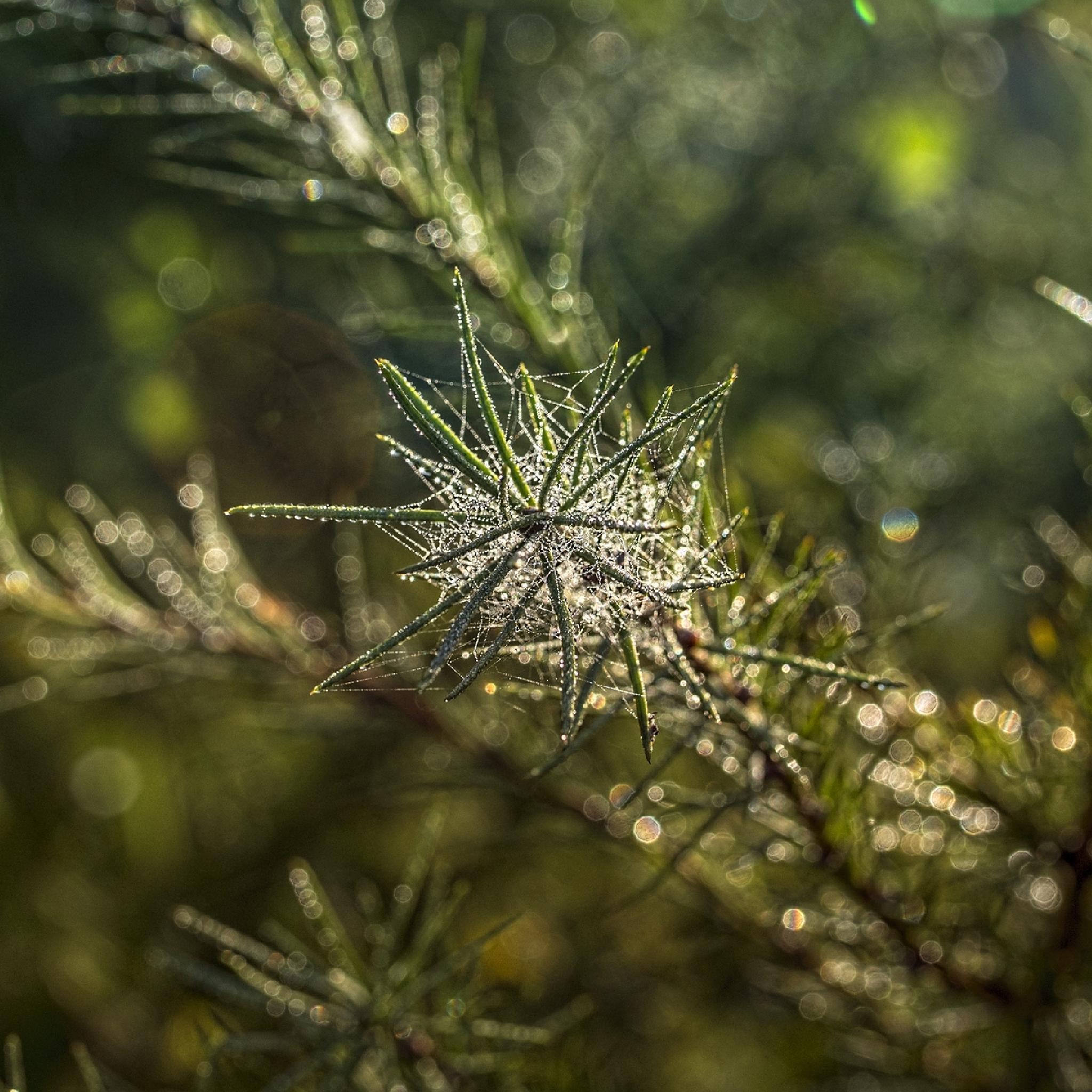 Nature by Waldemar Sadlowski