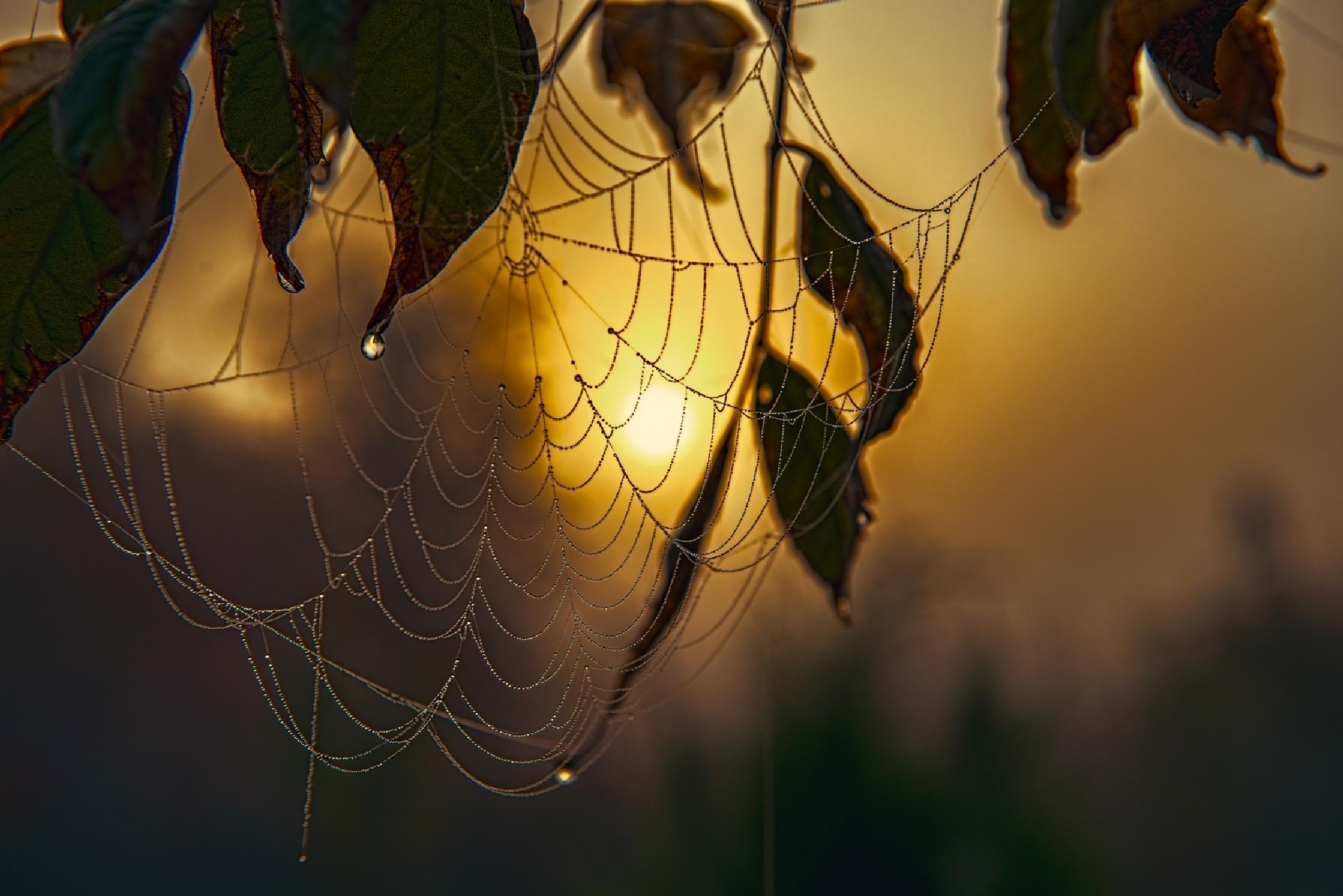 Foggy morning. by Waldemar Sadlowski