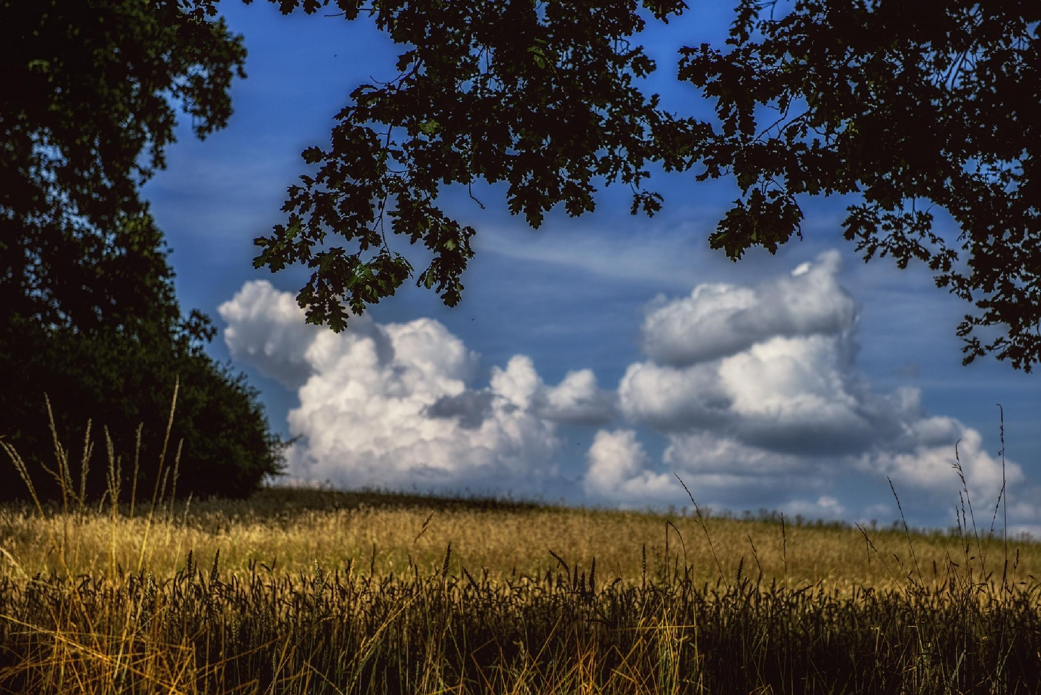 Beautiful afternoon by Waldemar Sadlowski