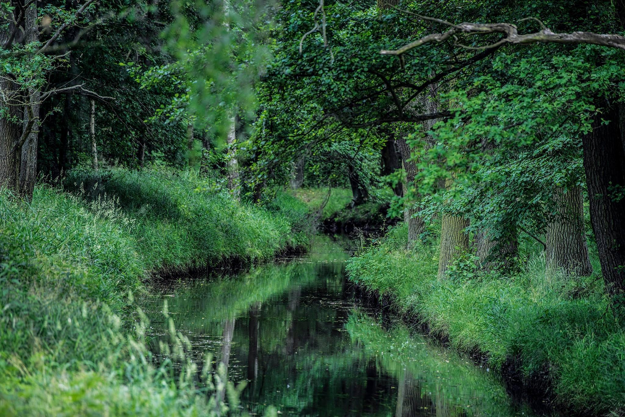 Brook in the forest by Waldemar Sadlowski