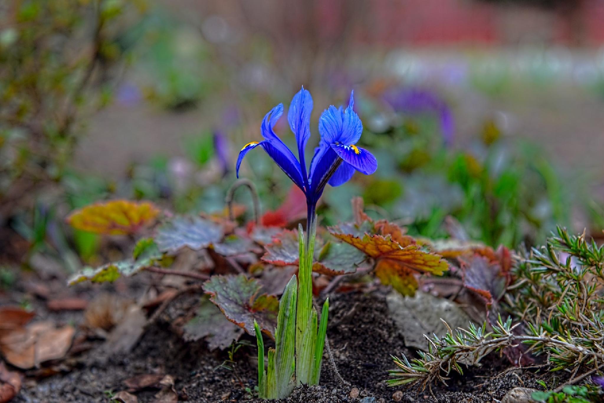 Spring news  by Waldemar Sadlowski