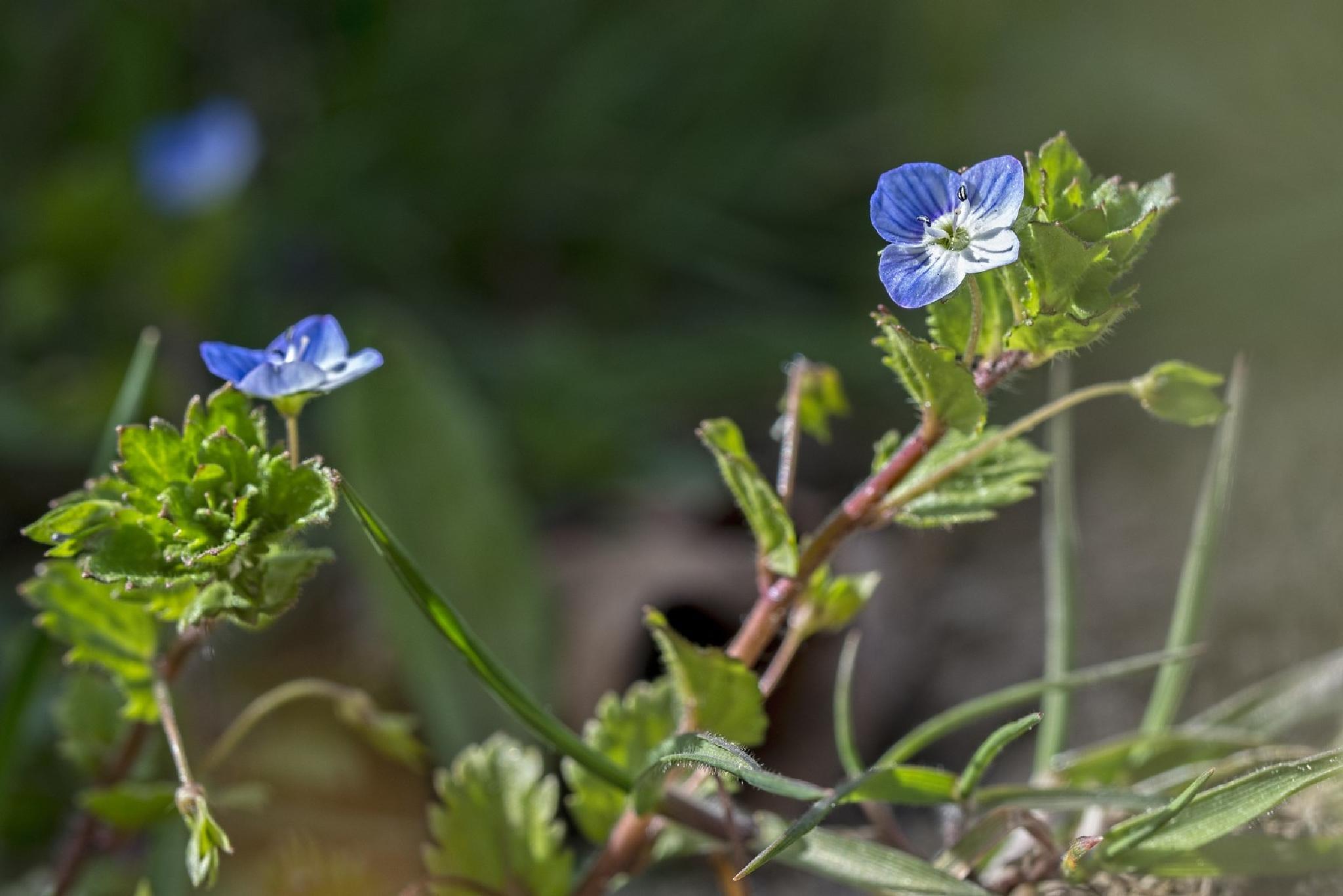 Spring Macro_14 by Waldemar Sadlowski