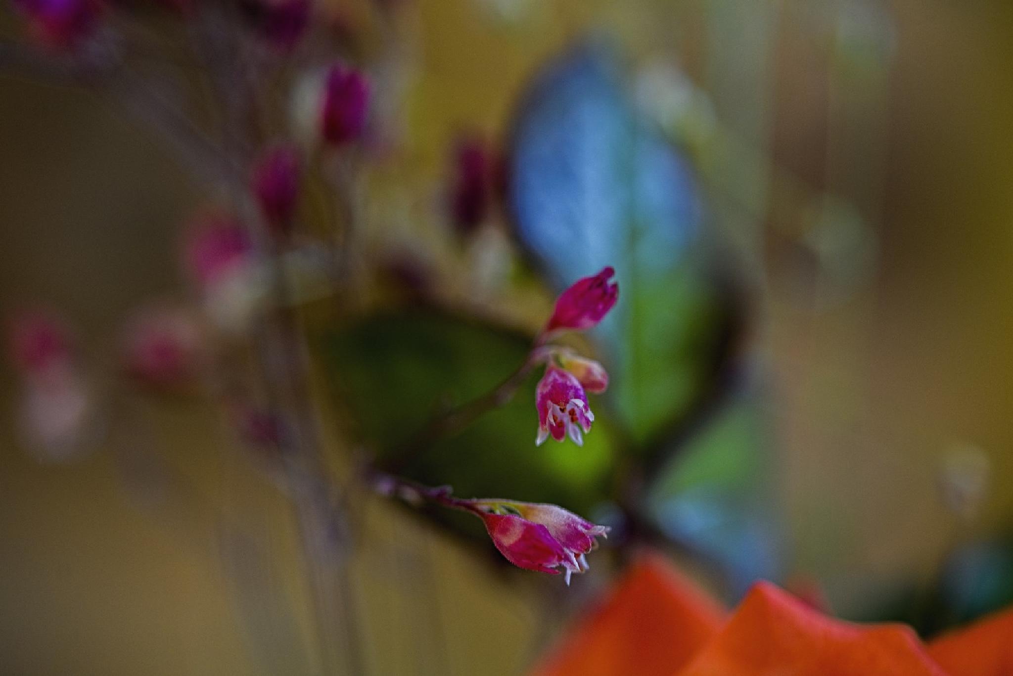 A bouquet of flowers and its secrets_07 by Waldemar Sadlowski