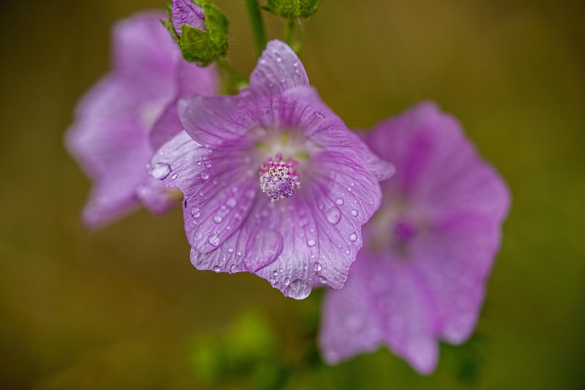 After rain_01 by Waldemar Sadlowski