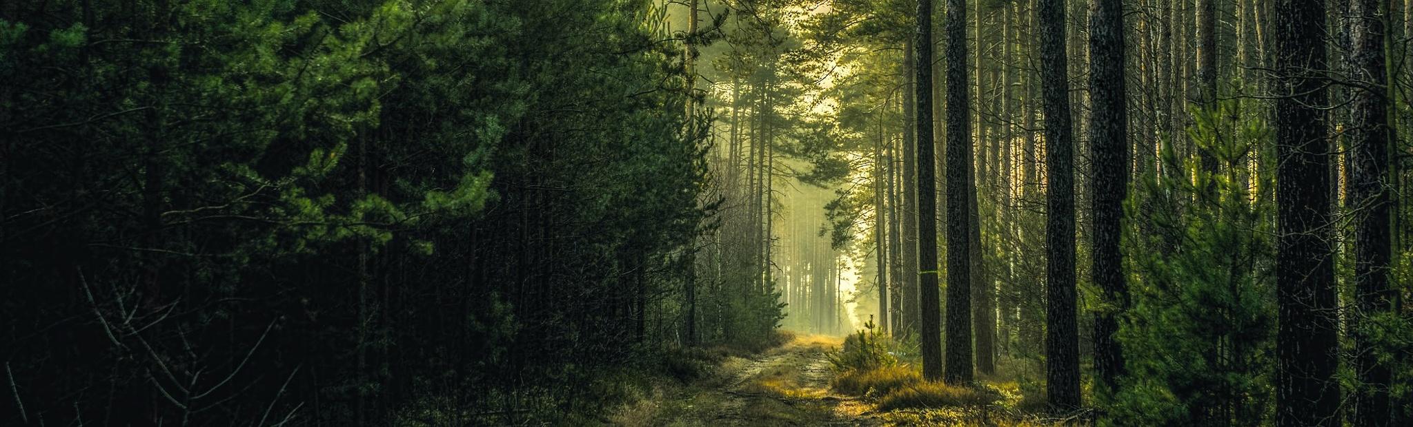 Light and forest by Waldemar Sadlowski