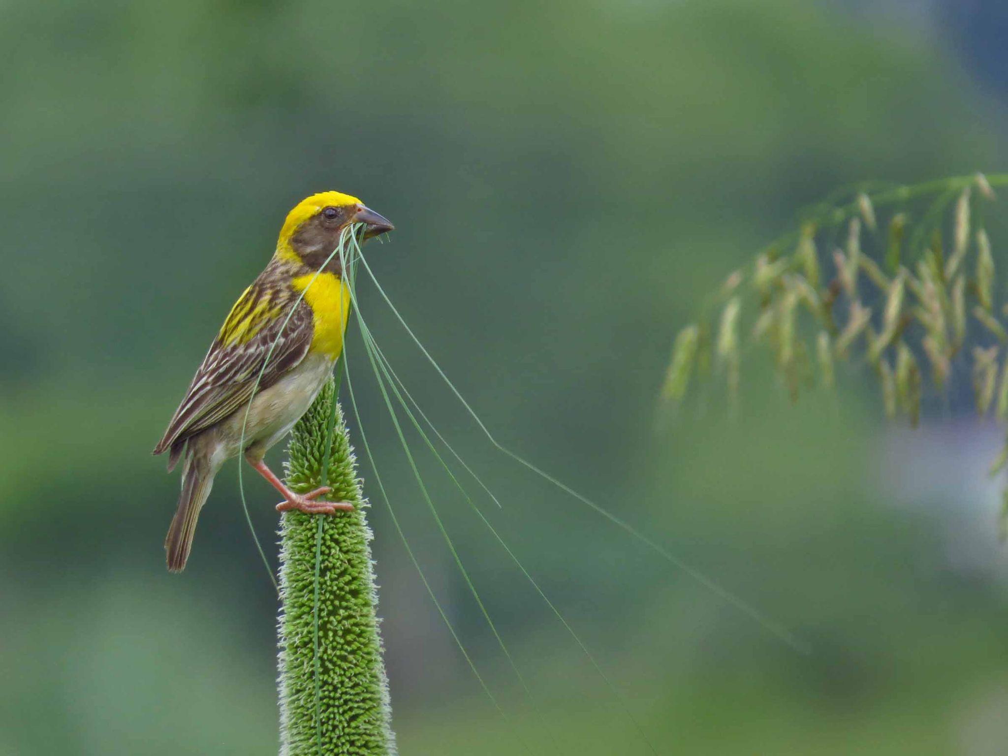 Nesting time by Kishan Meena