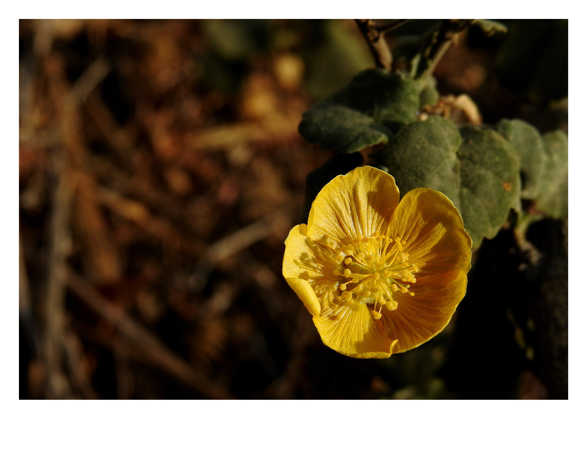 Yellow by Kishan Meena