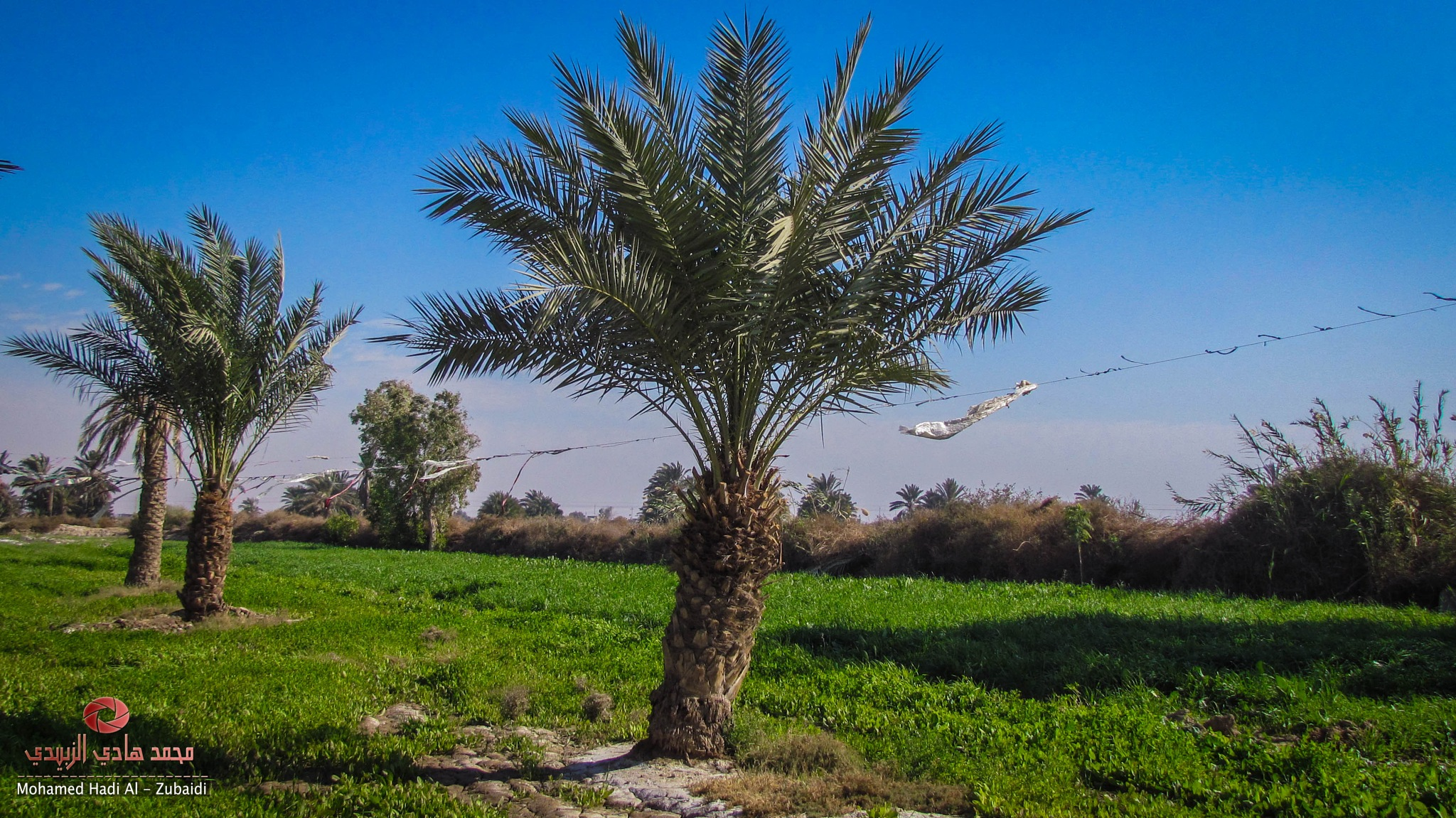 Untitled by Mohammed Hadi Al-Zubaidi