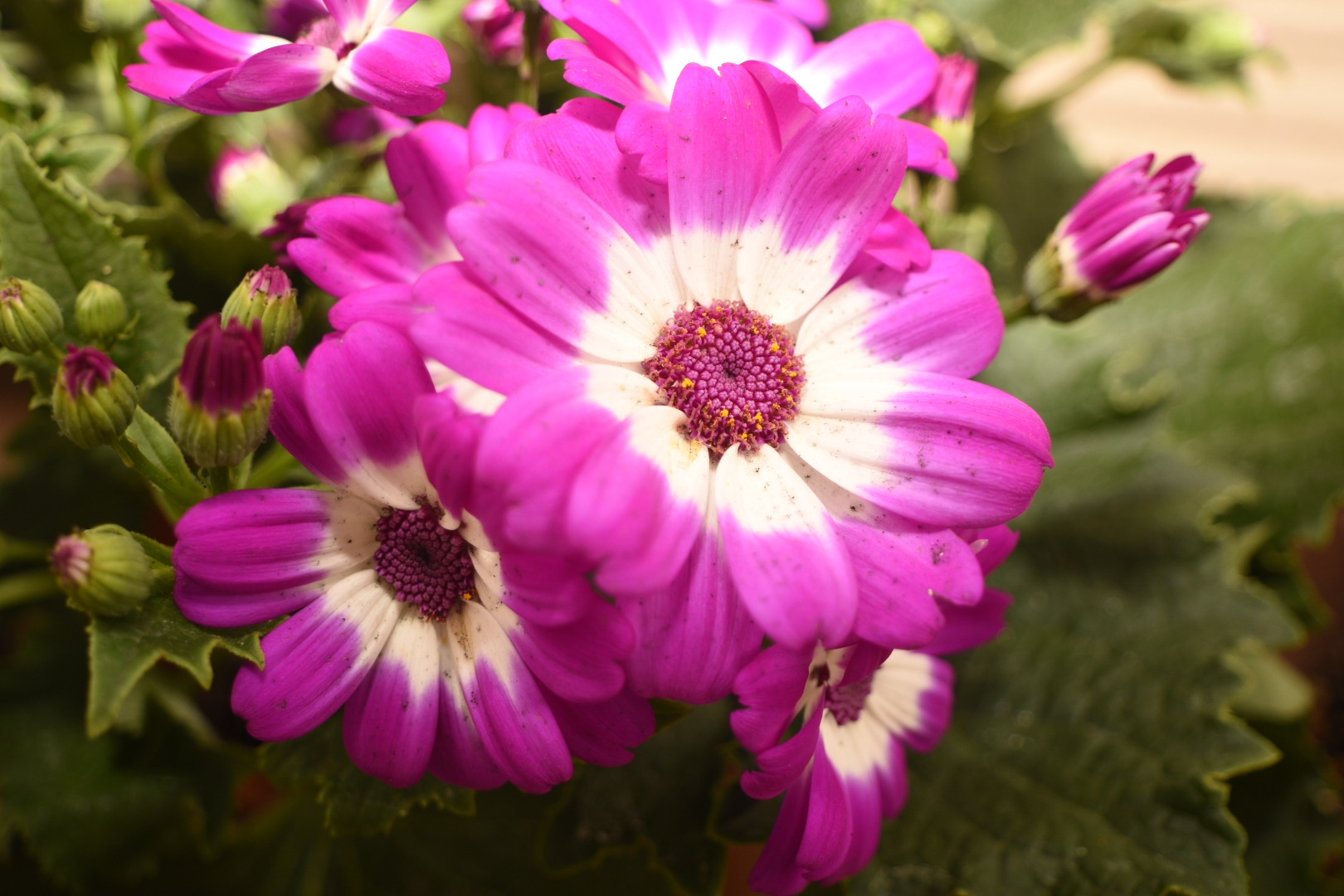 Flower by Toshio Sunada