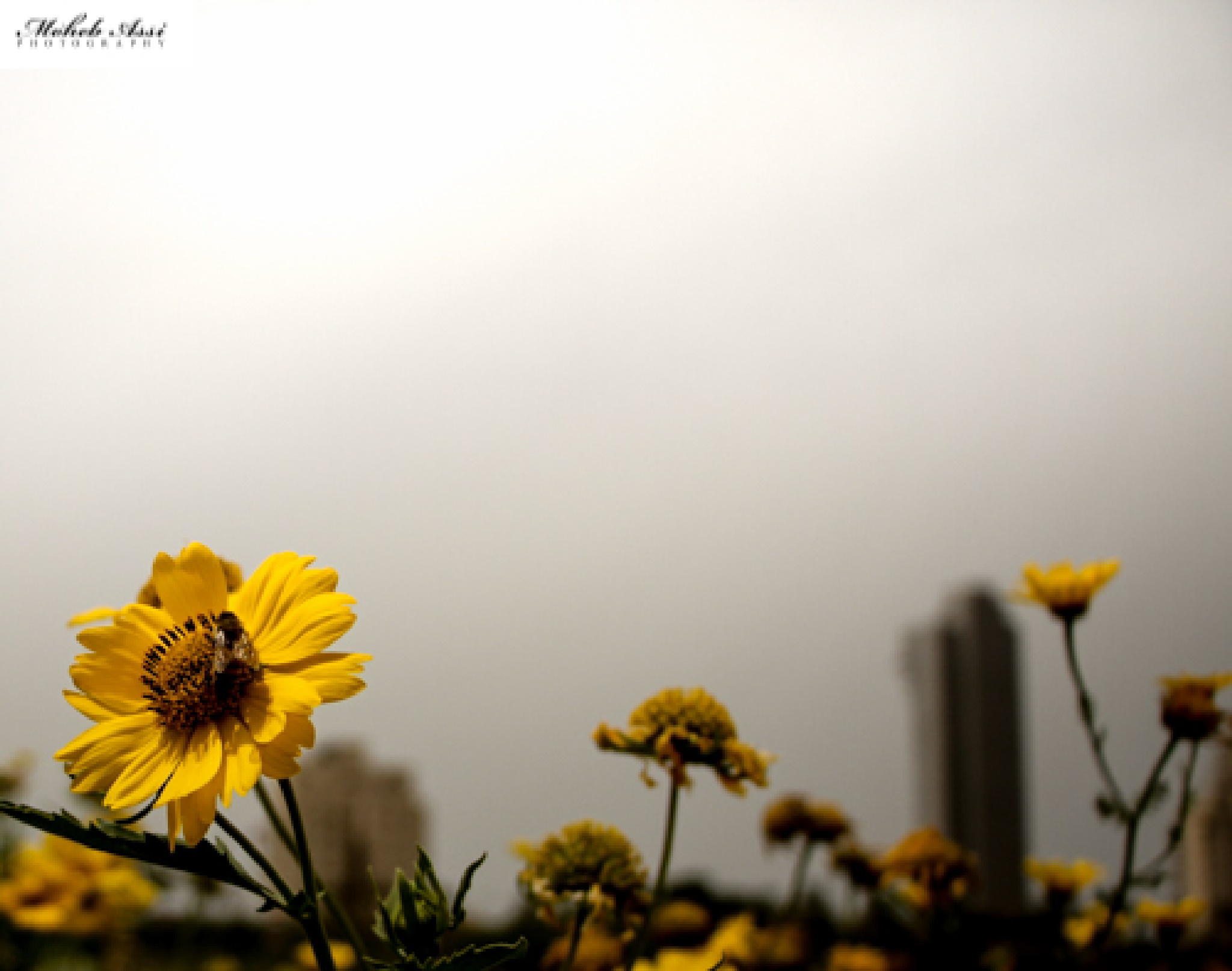 Untitled by moheb.assi
