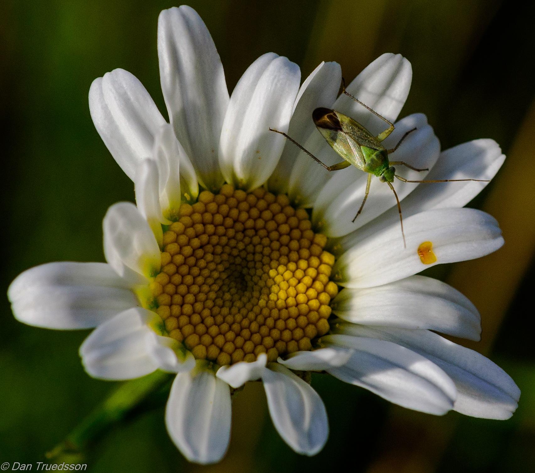 In the garden by Dan Truedsson