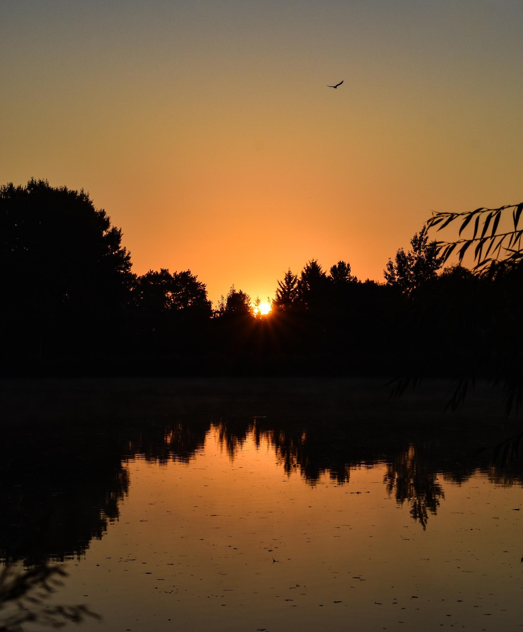 sunrise with a seagull by István Palánki