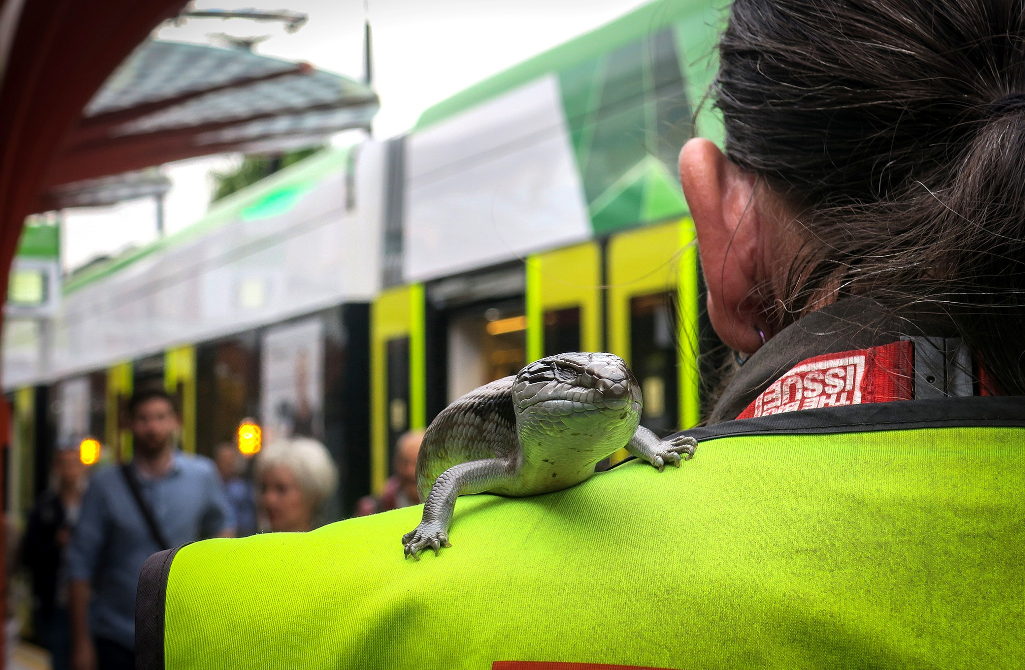 """""""A chip on your shoulder?"""" No A lizard. by Leigh Henningham"""