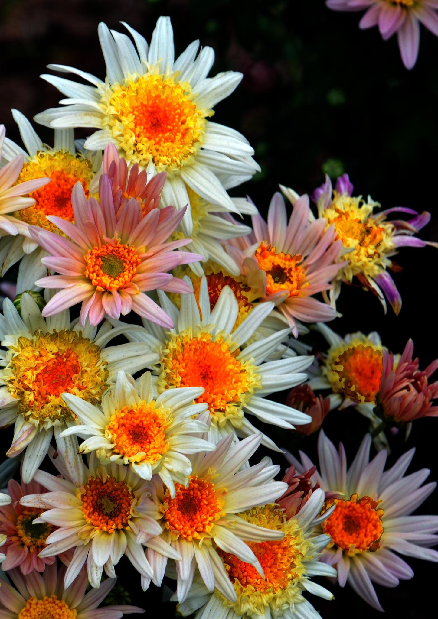 flowers by Samuel Johnson