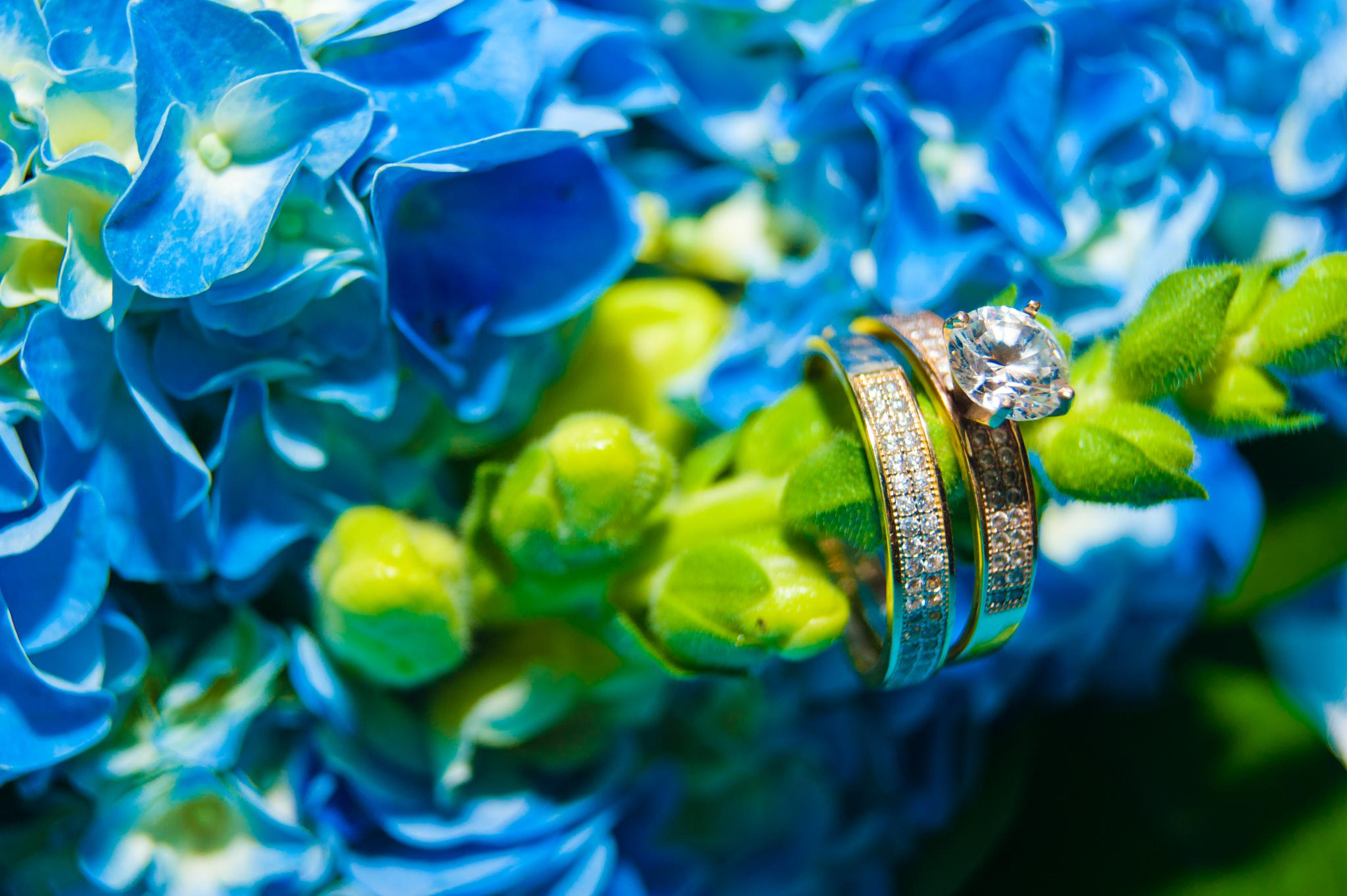 Nature Rings  by Leoangel Dume Troncoso