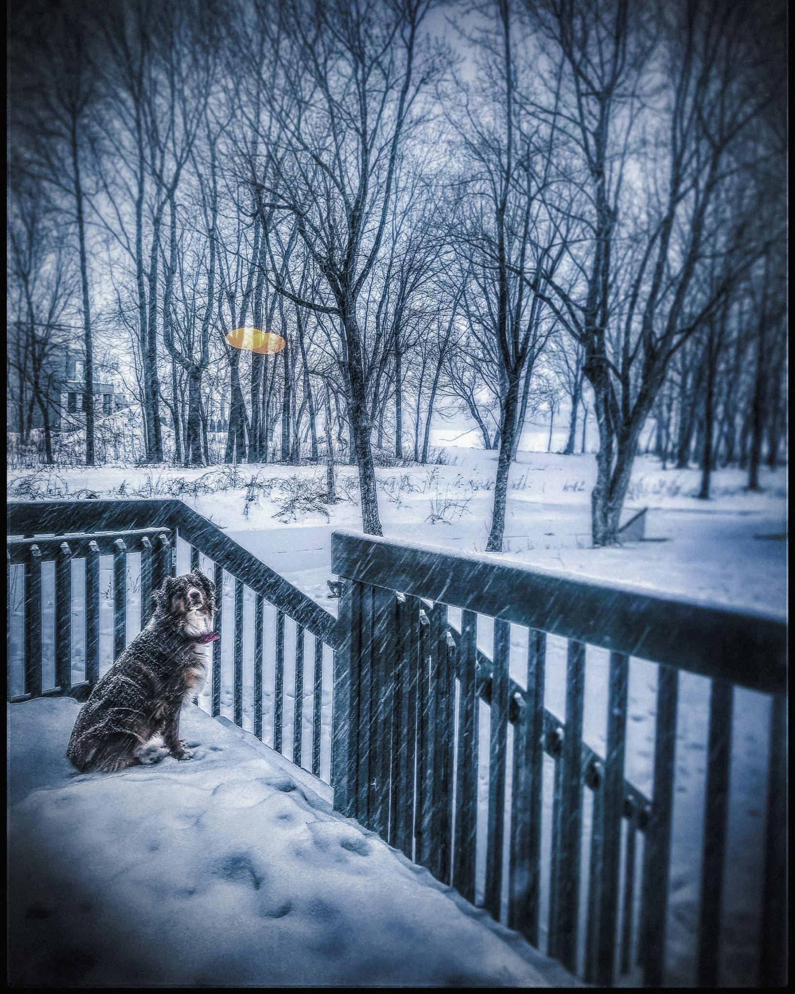 Photo in Random #dog #dog #aussie #nature #whitestorm #snow #snowstorm #storm