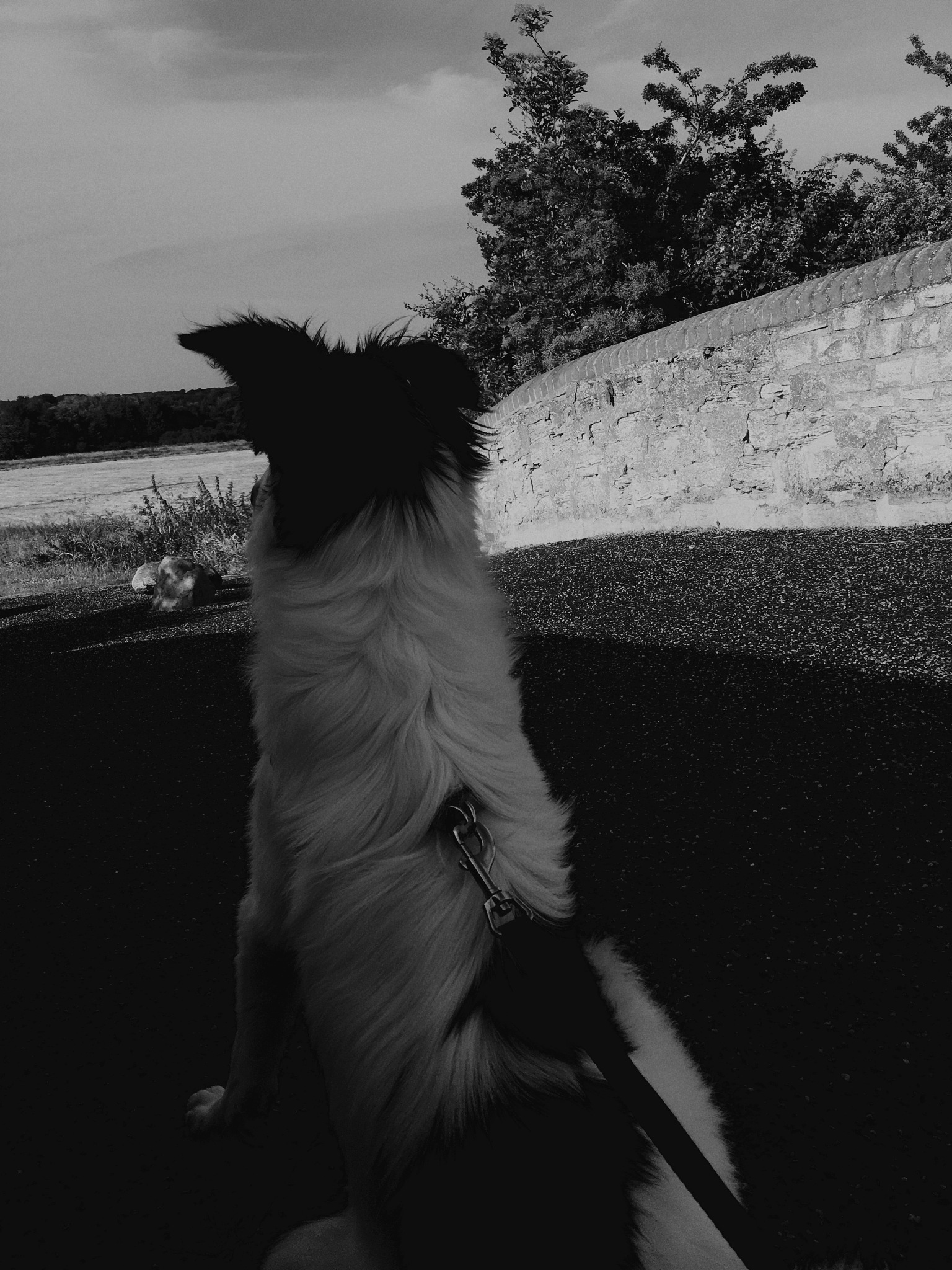 Puppy & Bridge by Tazmin Buckingham