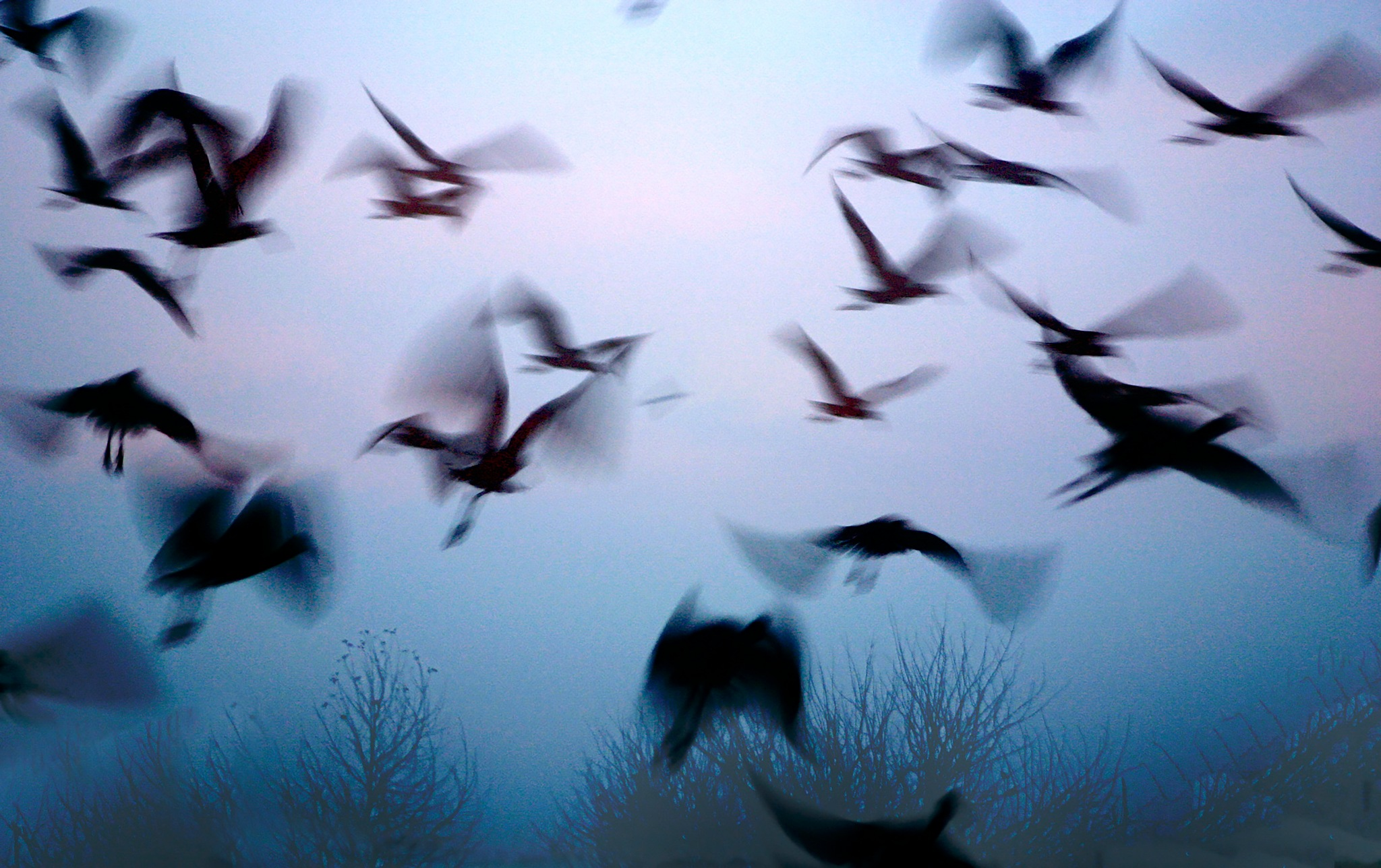 The Cranes in flight early morning by Rebecca Danieli