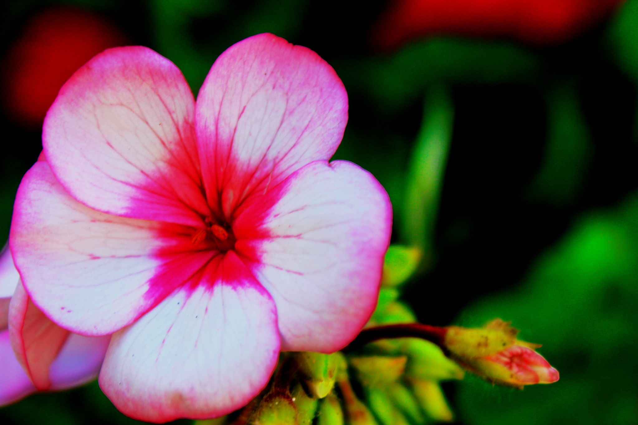 A Flower ! by Imed Photography