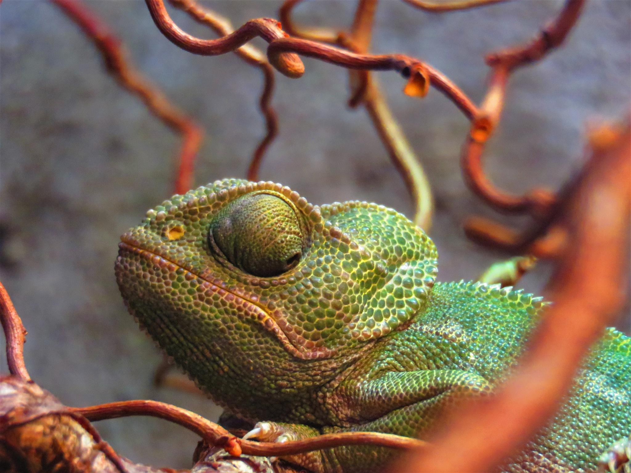 Kameleon by Marianne Krijgsman
