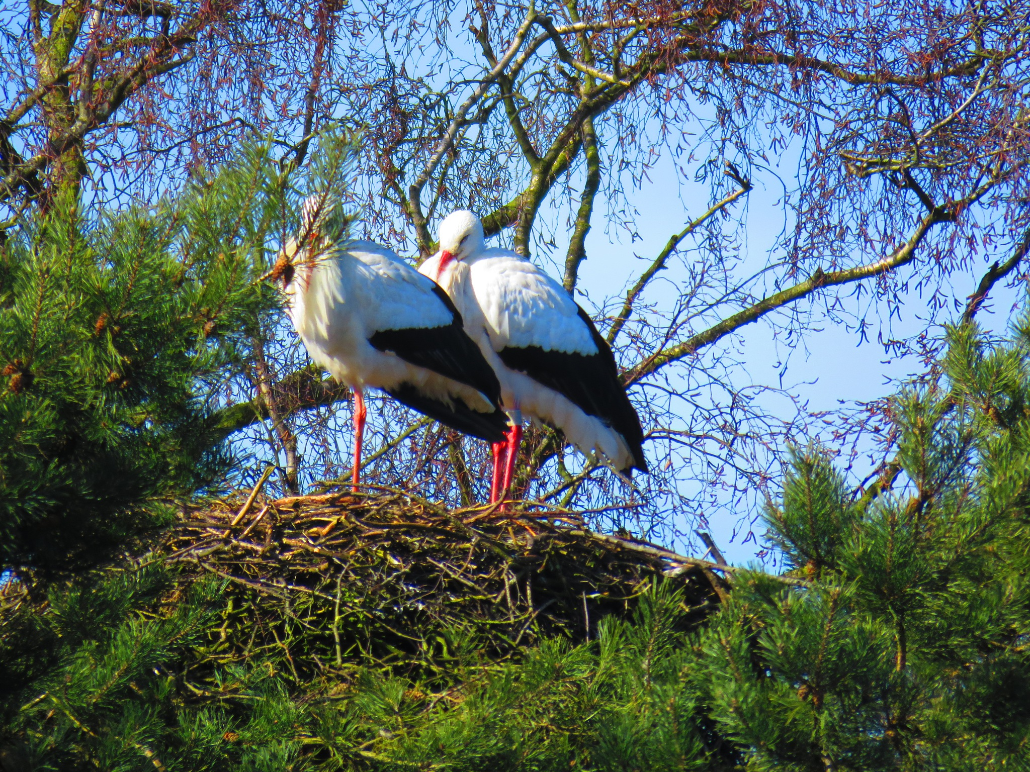 Ooievaars op nest by Marianne Krijgsman