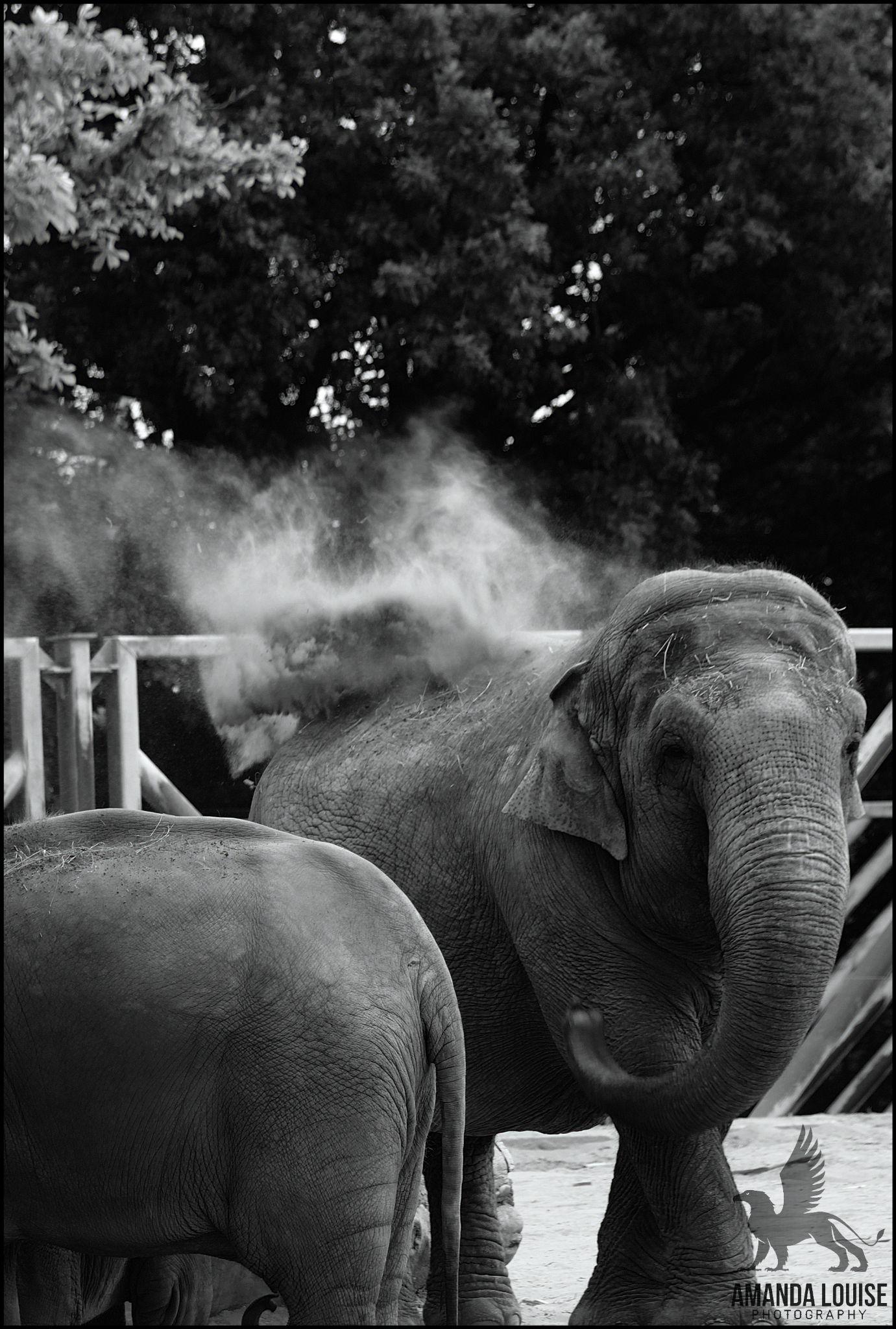 Dust bath! by Amanda Louise Steele
