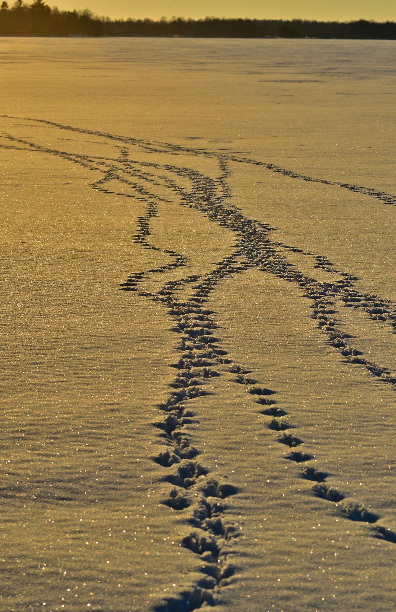 Tracks on a Frozen Lake by Sandra Dedrick