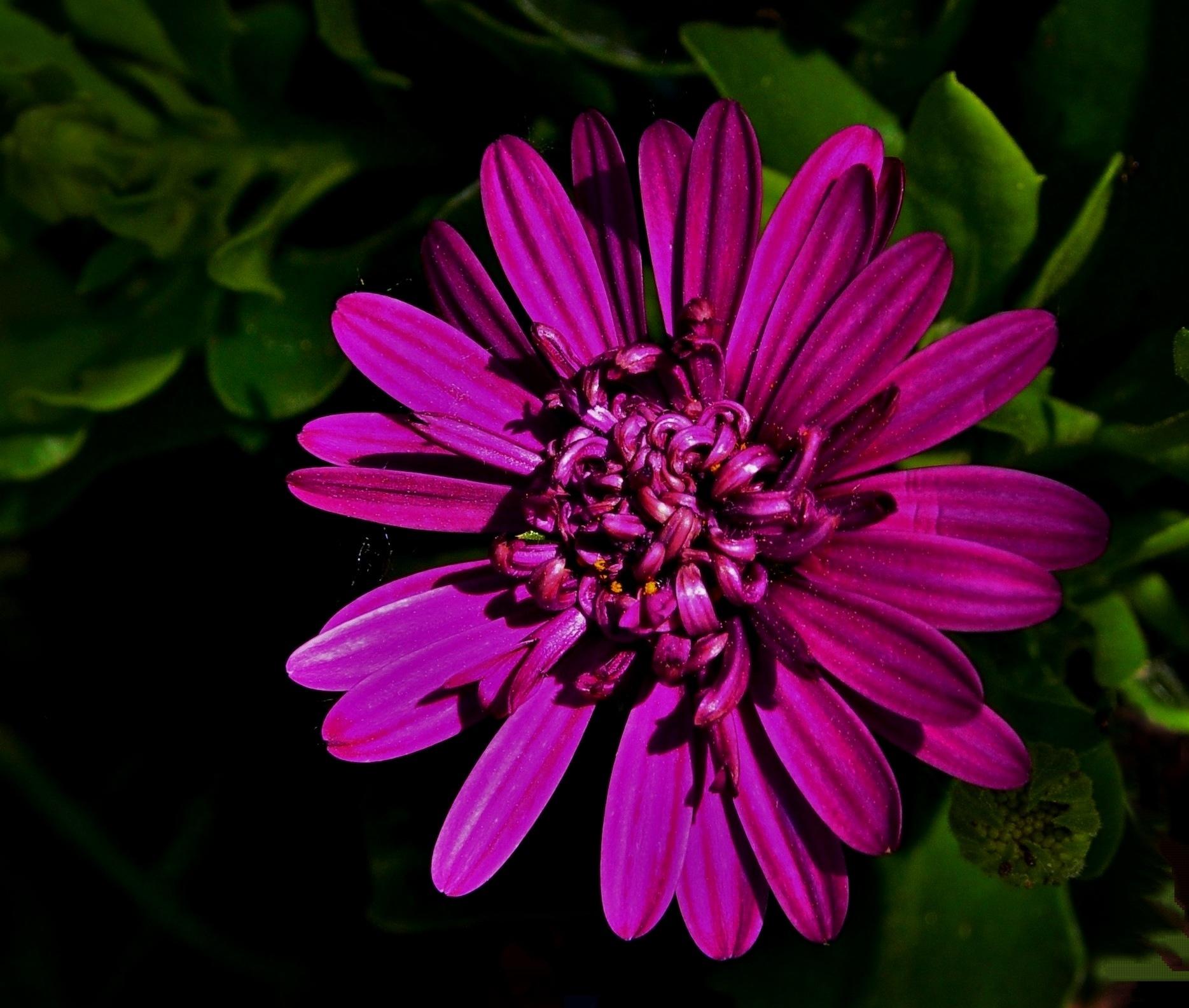 Purple Flower by Sandra Dedrick