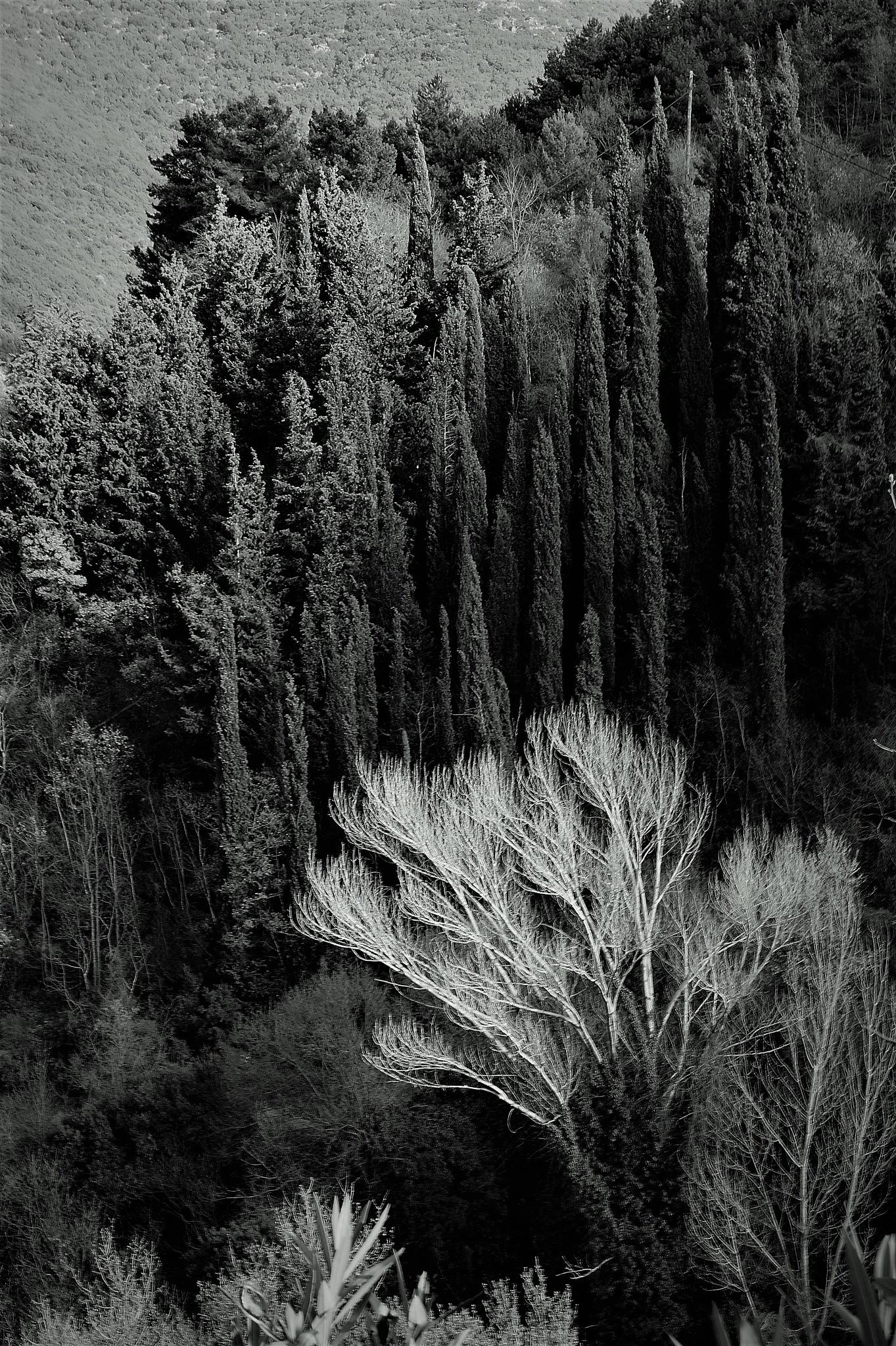Trees by Christos Theodorou