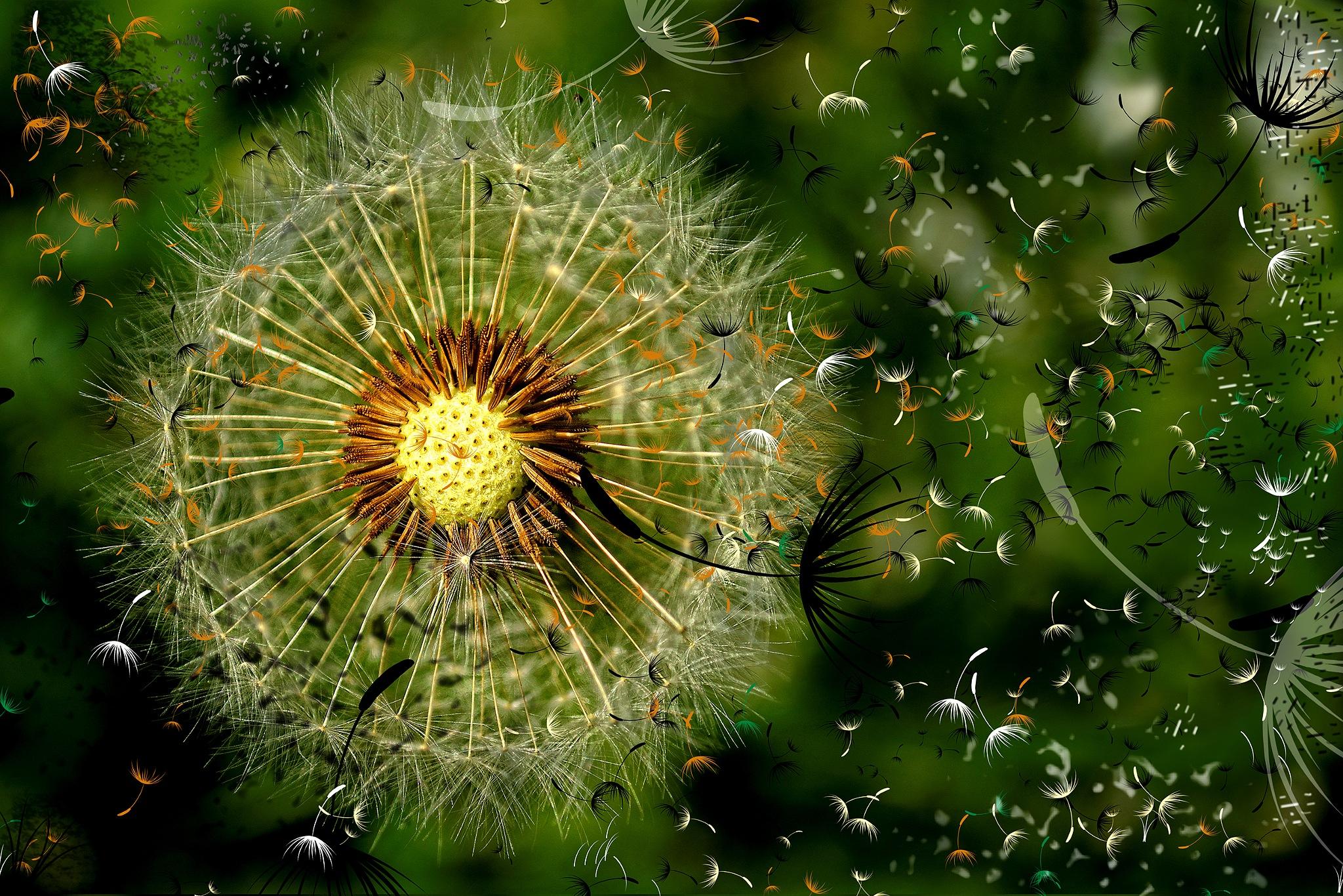 dandelion art by Cor de Keijzer