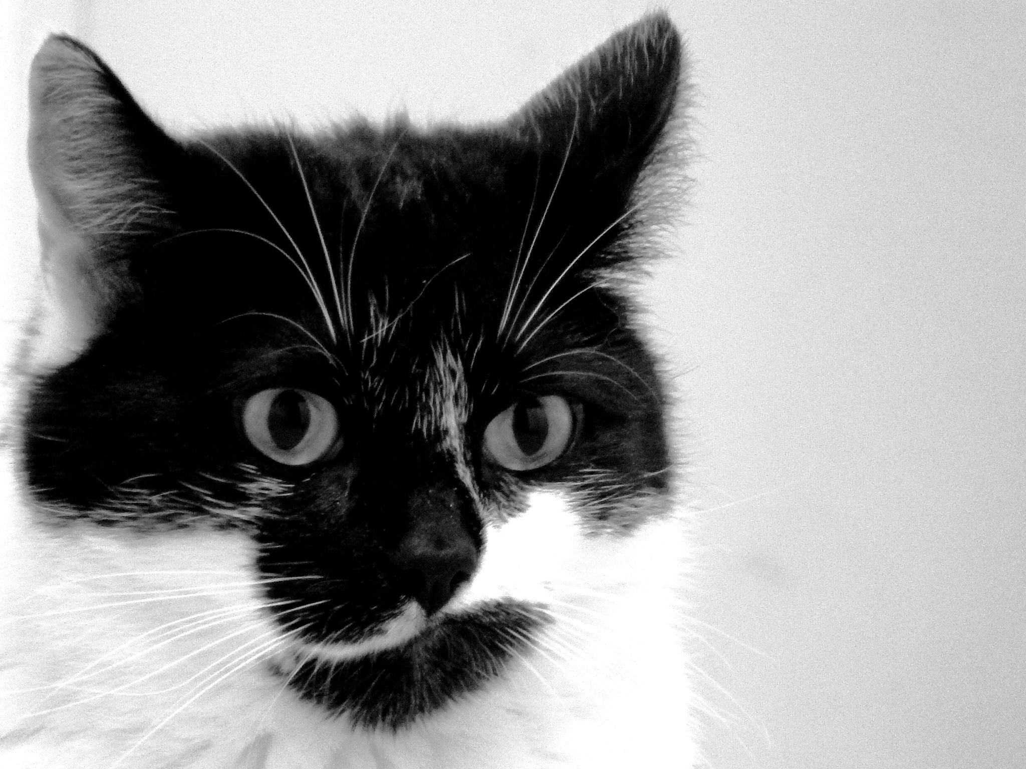 cat portrait by kot_pachinko