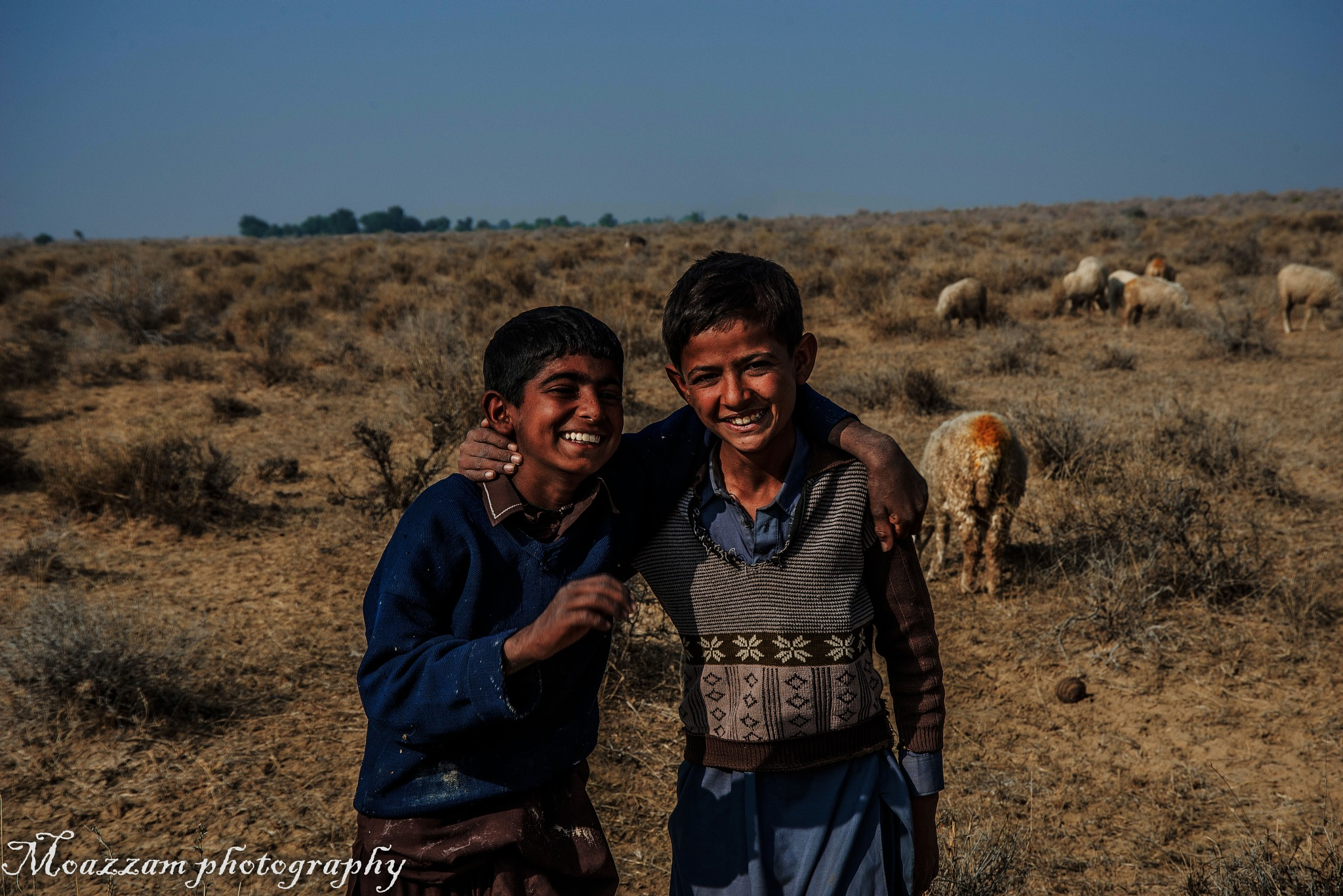 sheep boys by moazzamphotography