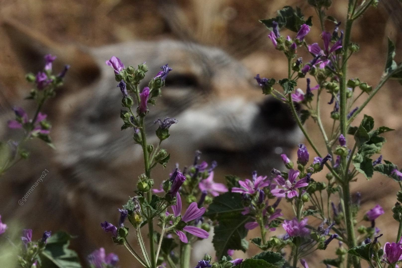 Wolf1 by @germmanyo21