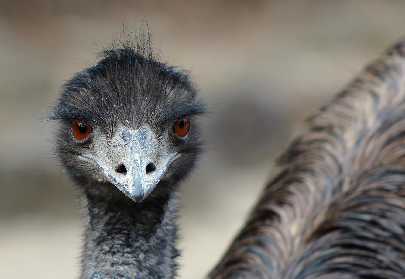 Emu. by blinkings