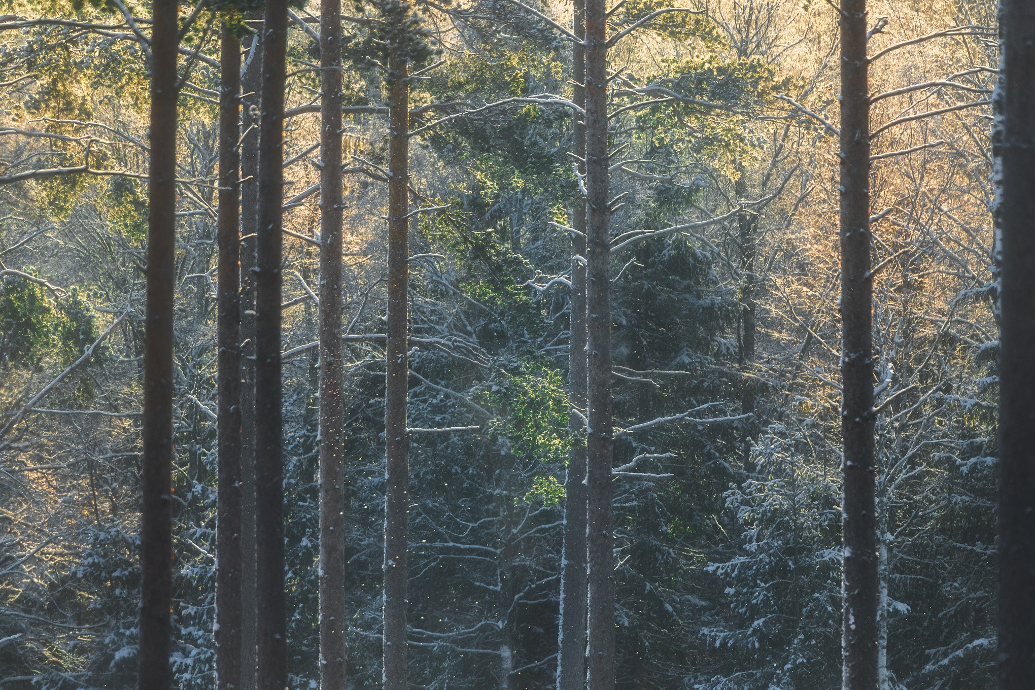 Forest by Johnny
