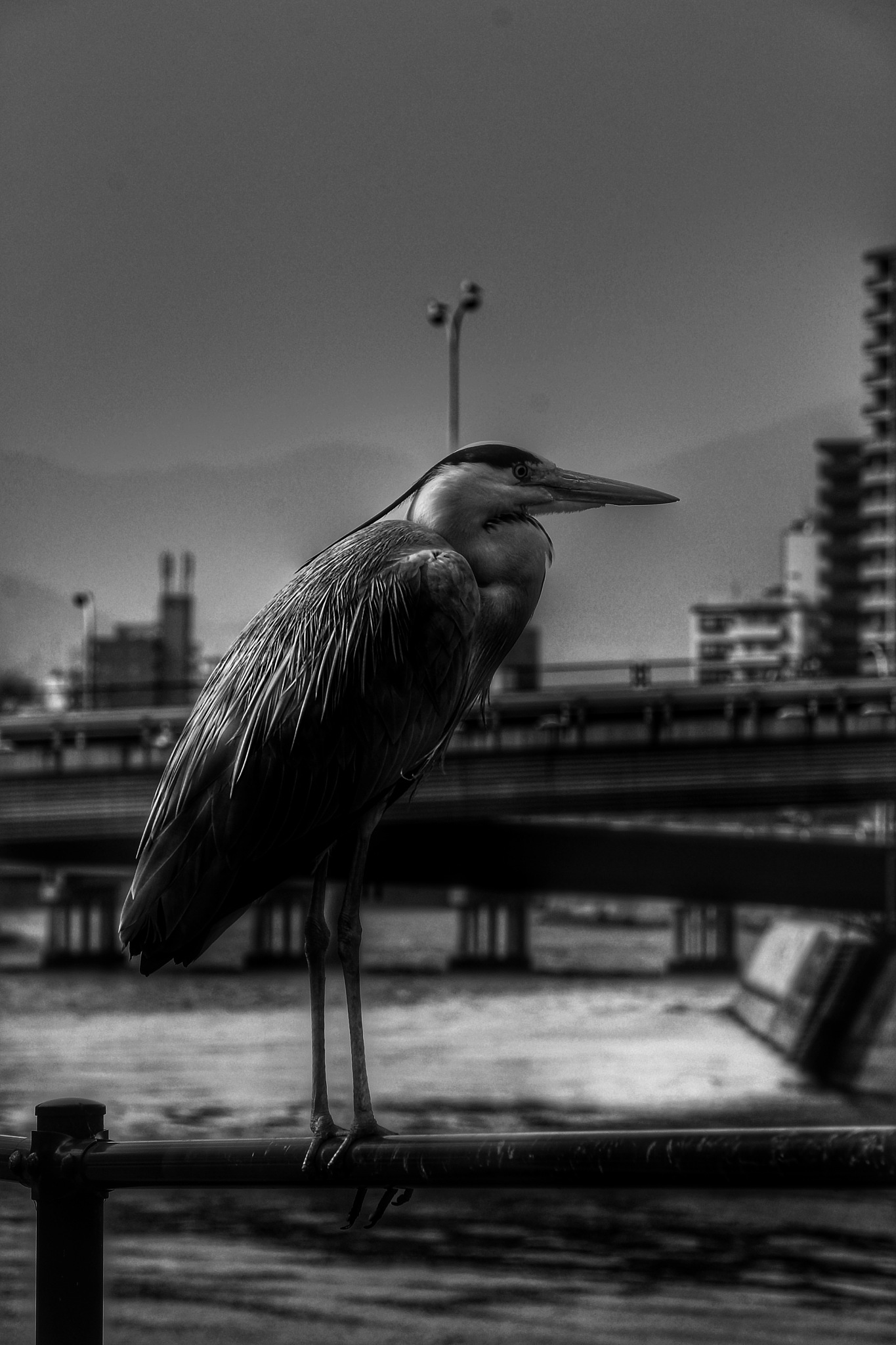 The heron of Heroshima by Armed-with-a-smile