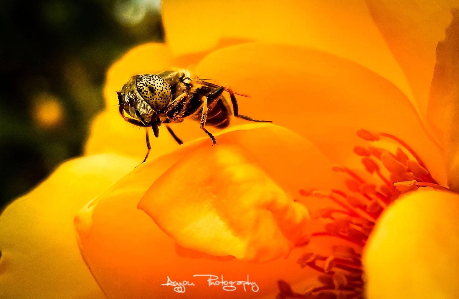 wondering bee by Azzou ßenz