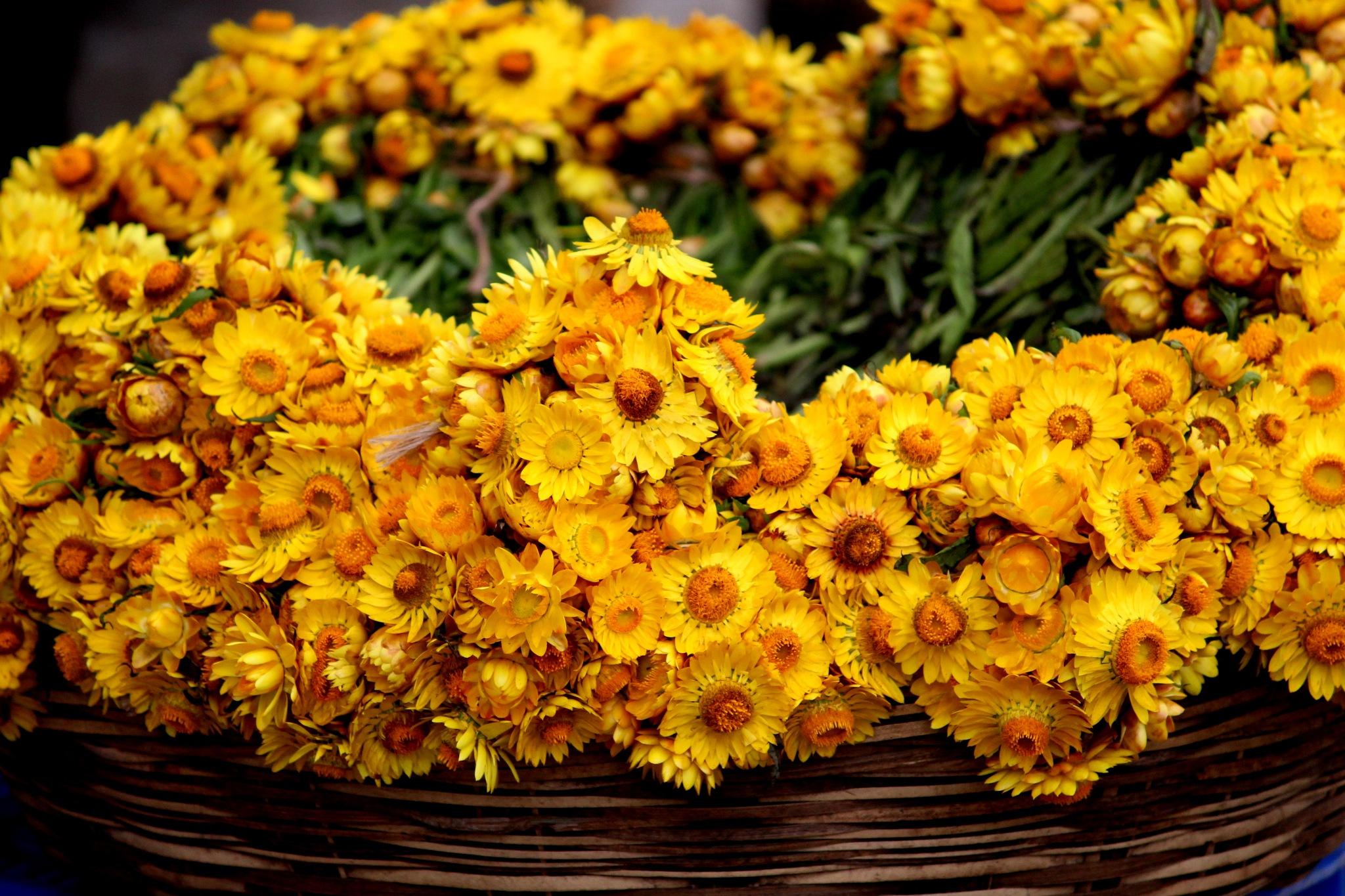 Flower by Laxminandan Satpathy