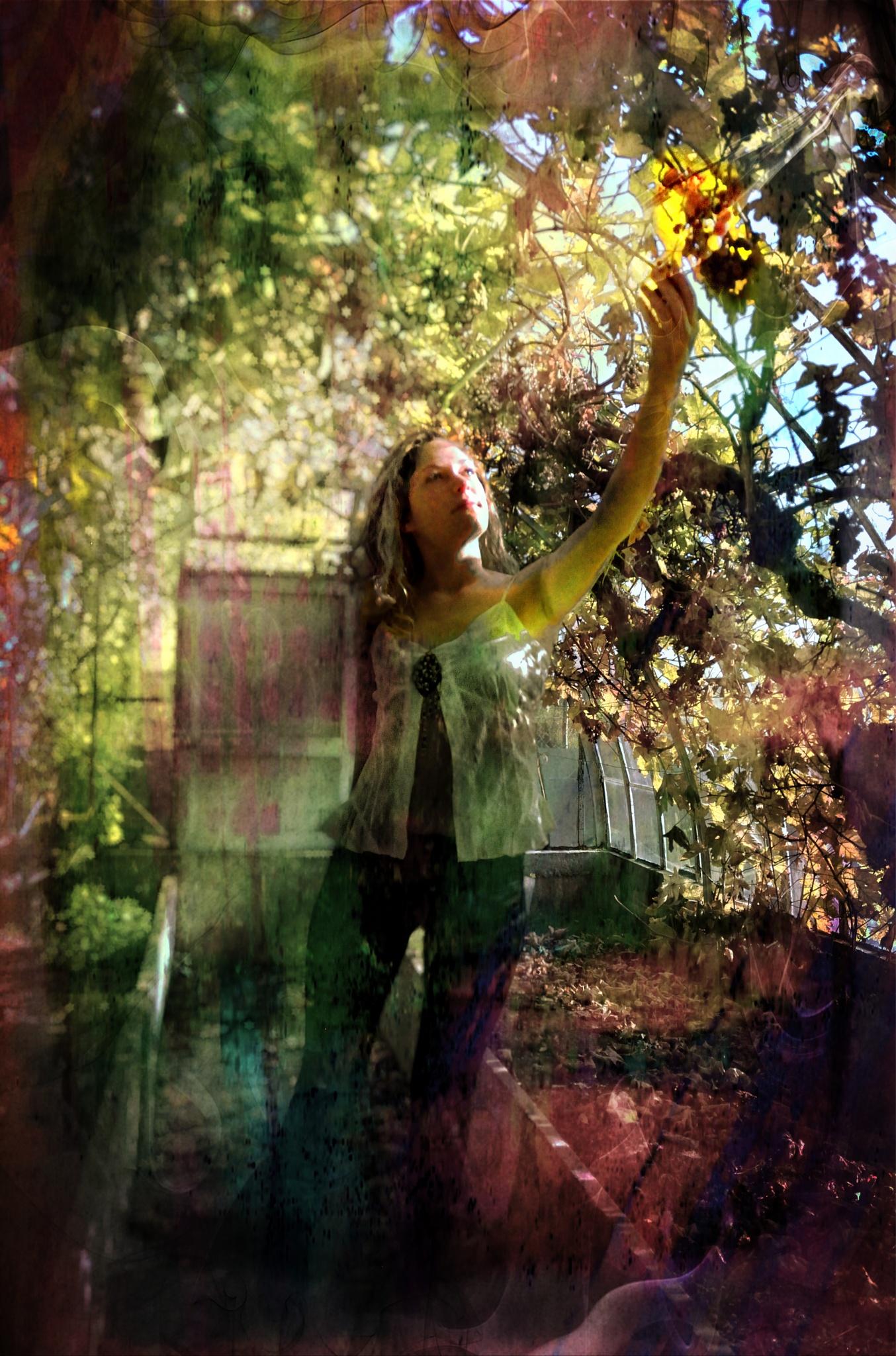 dreamy greenhouse by Pozofolio