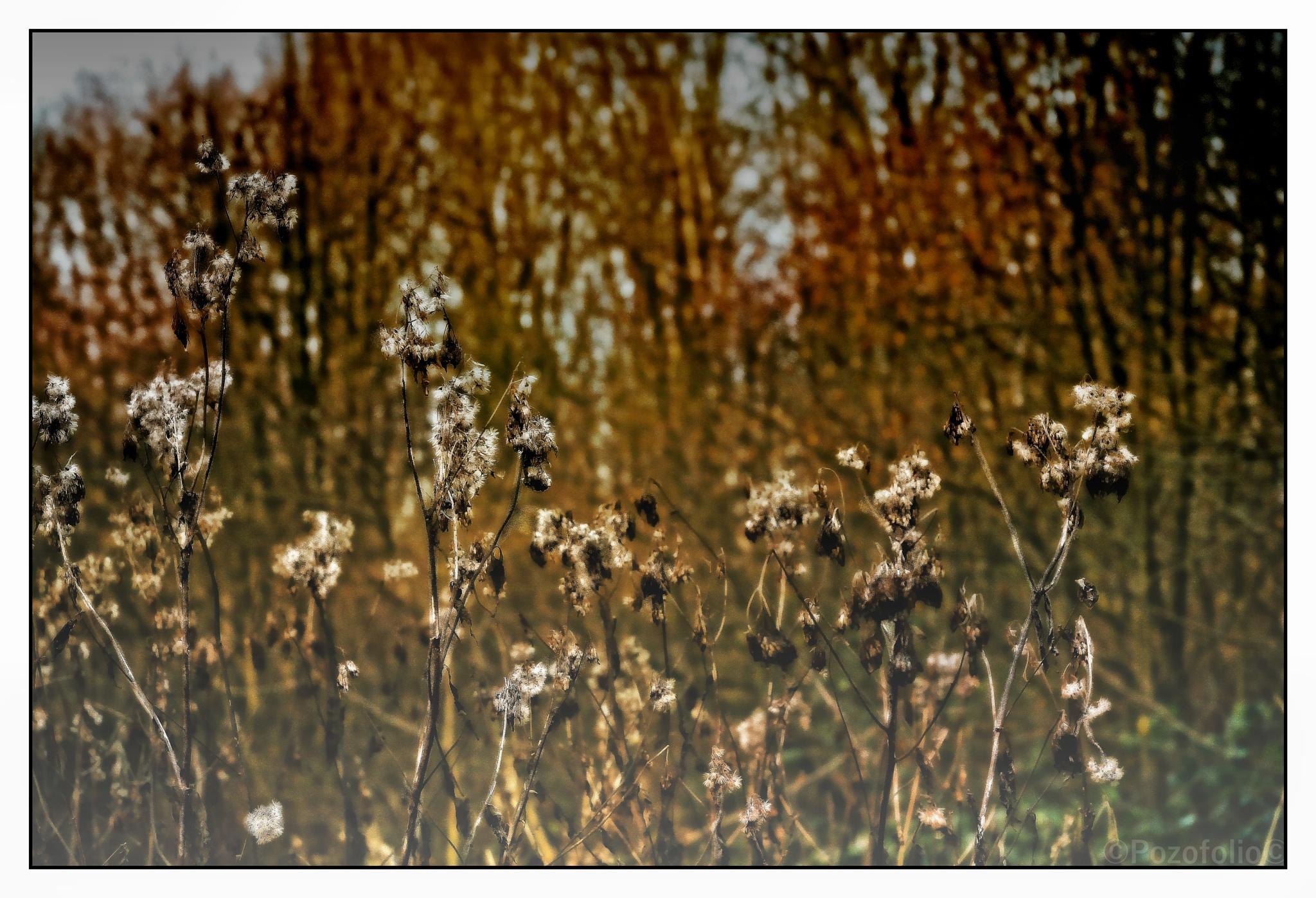 Winterflowers by Pozofolio