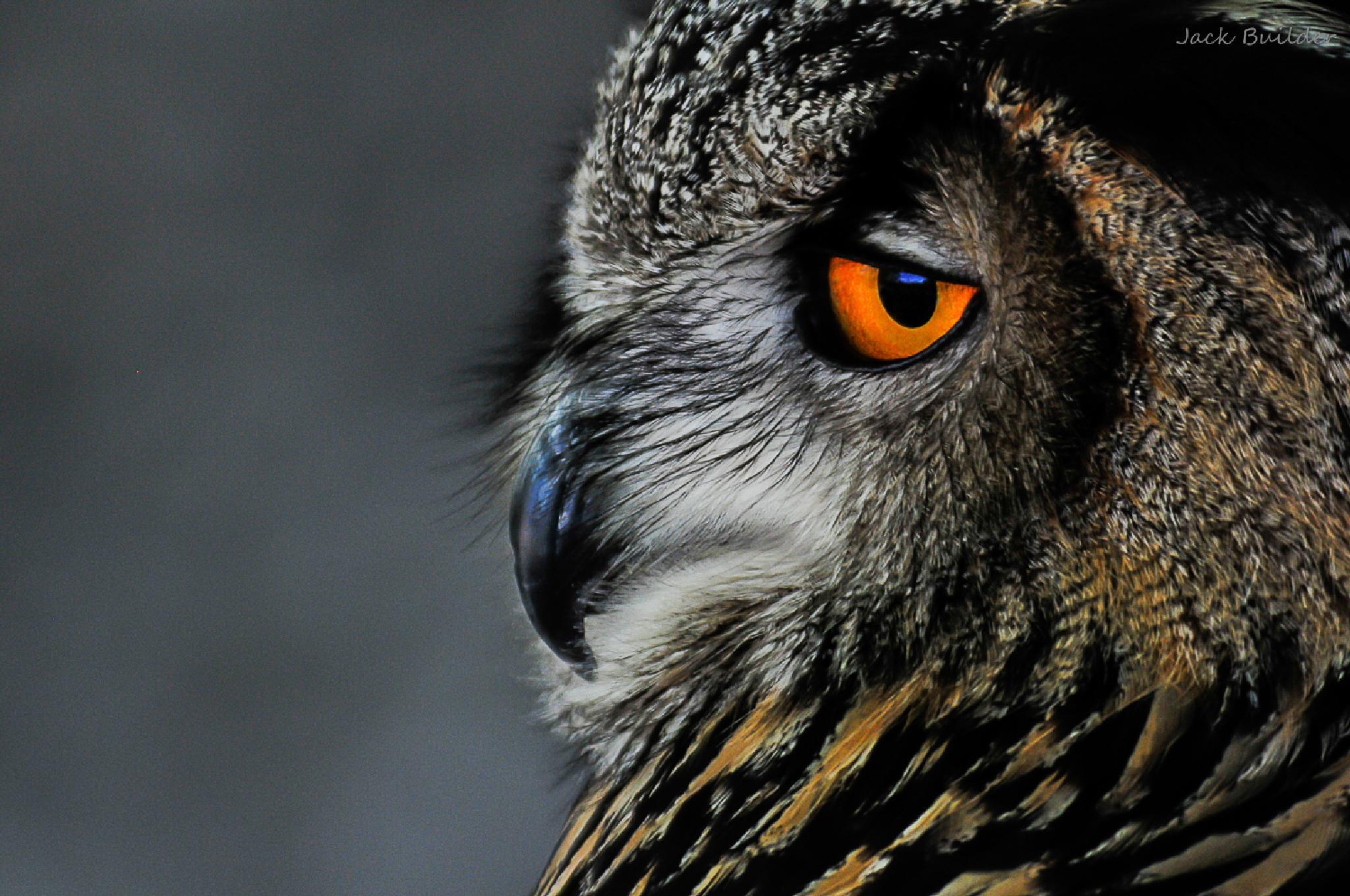 owl by Cesc Valcarcel
