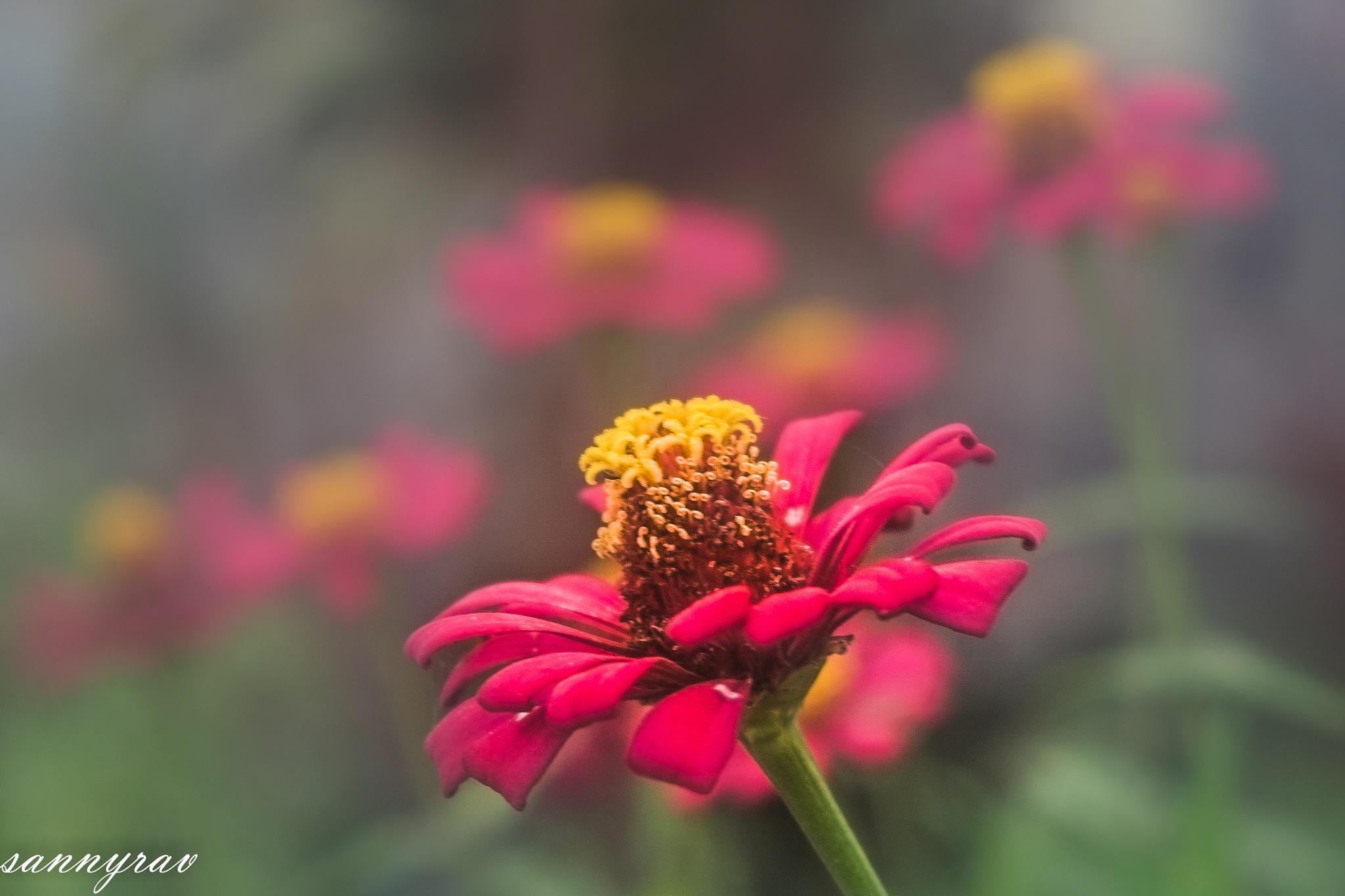 red flower by sannyrav