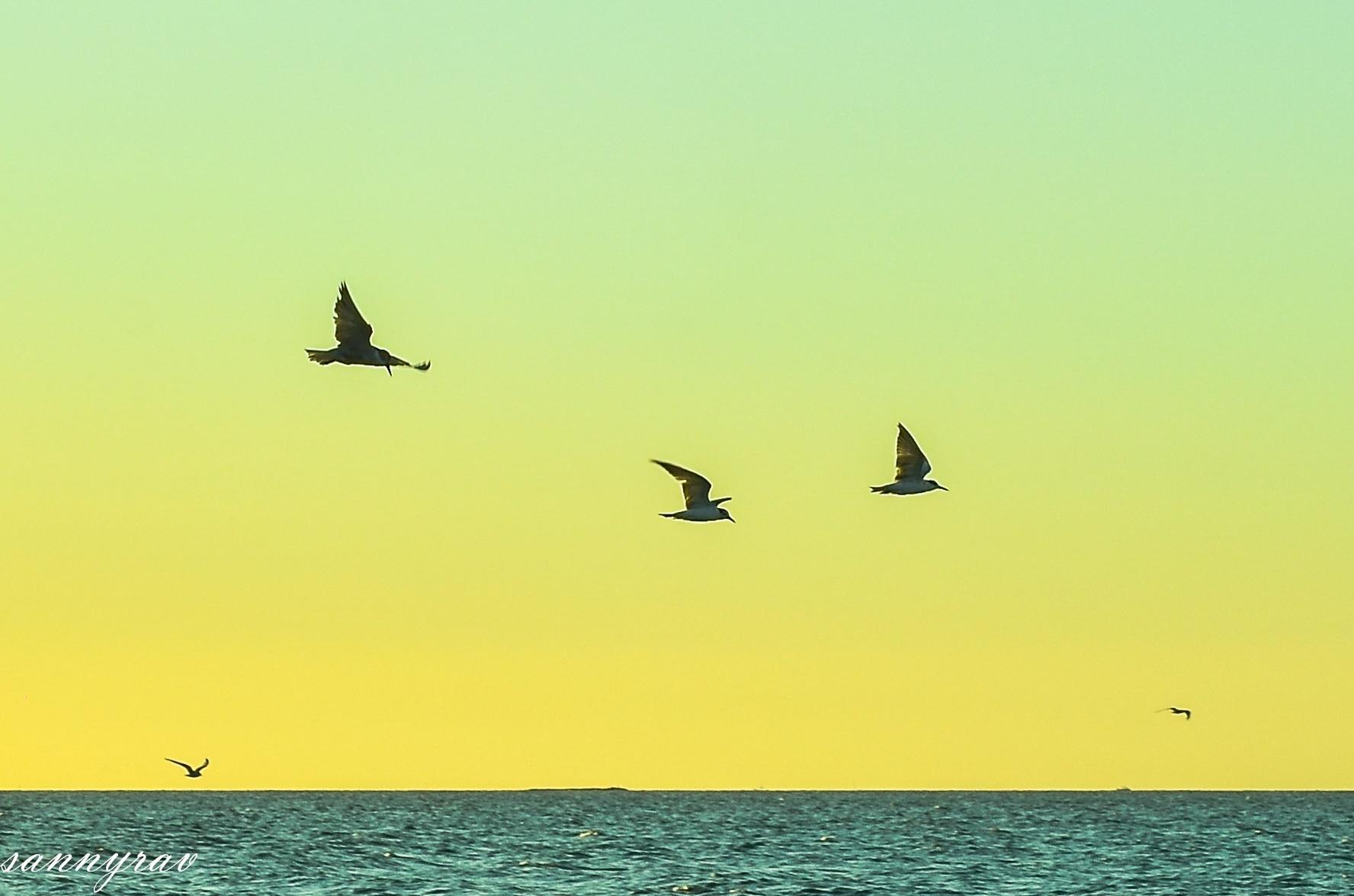 in flight by sannyrav