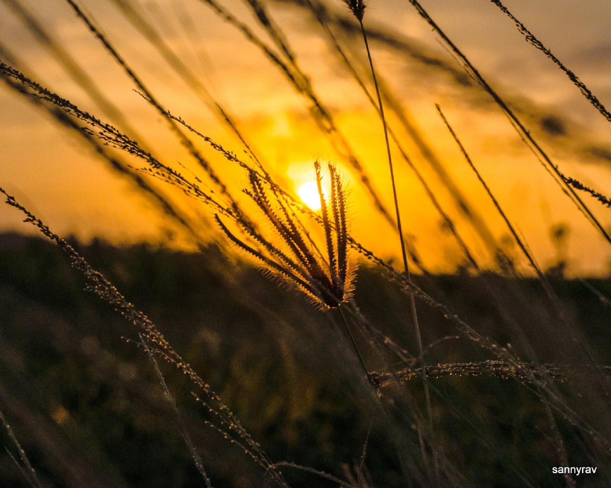 weeds by sannyrav