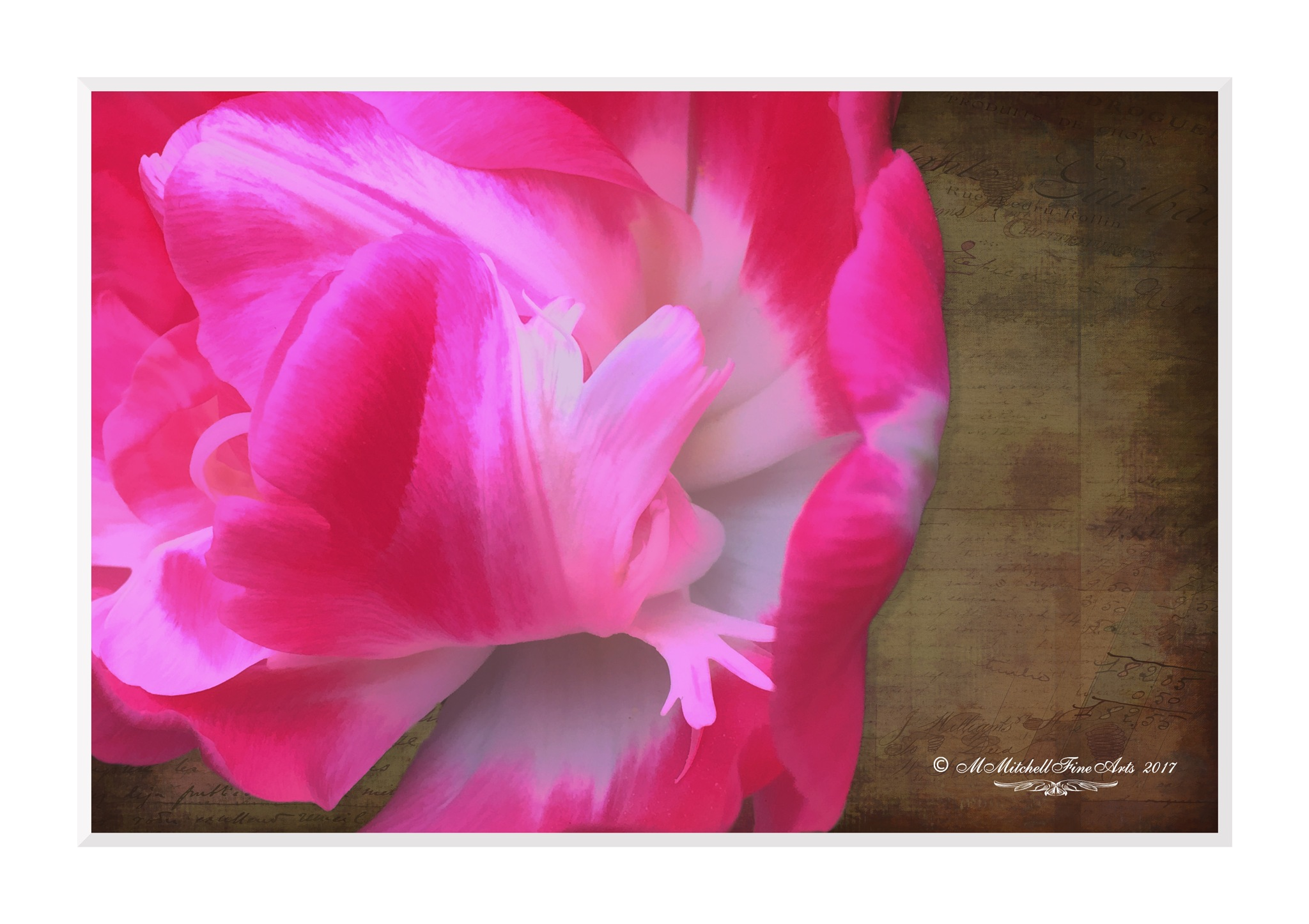 Pink Flower - Stanford by Mary Mitchell