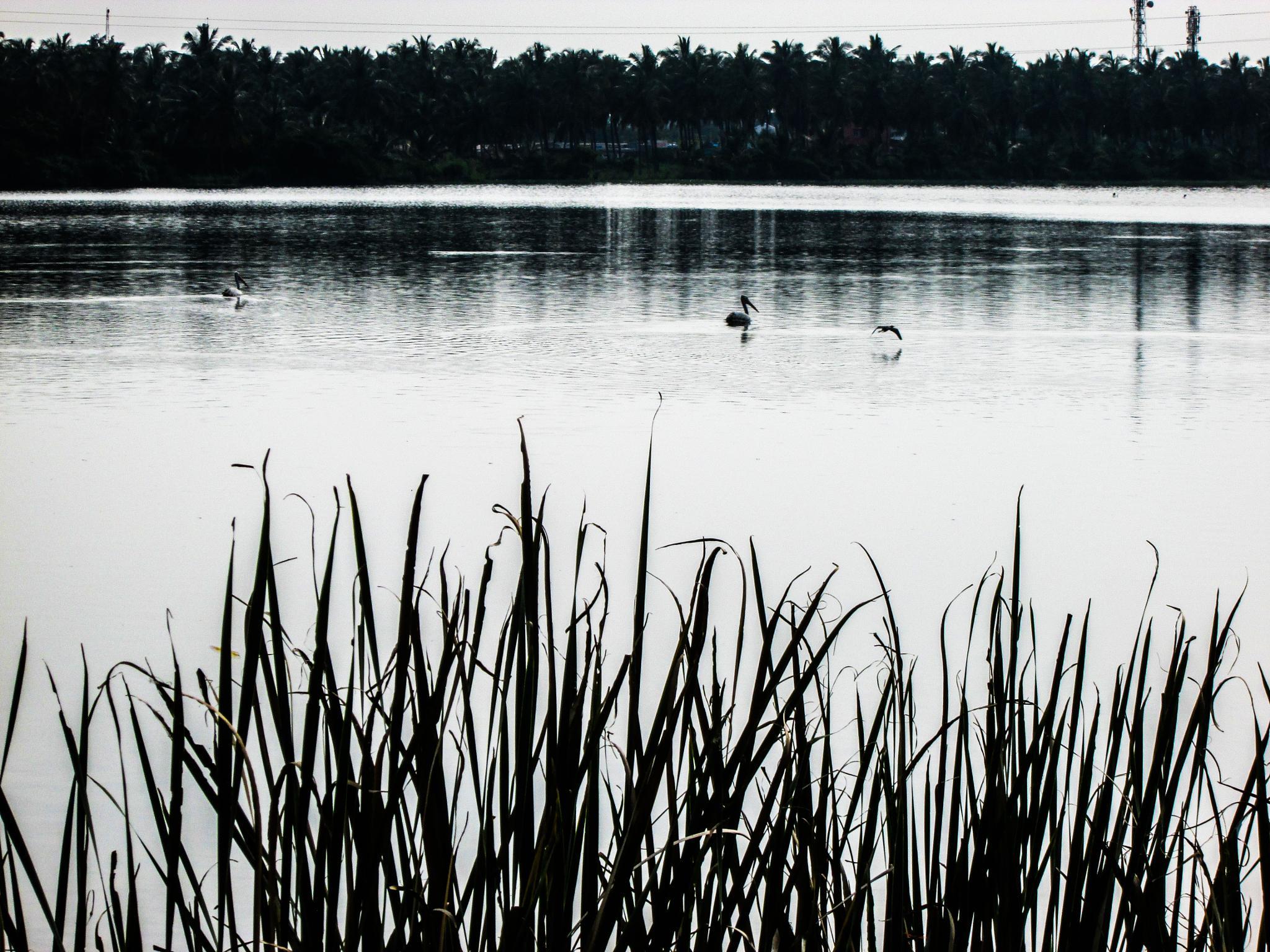 Untitled by Hari Prasath