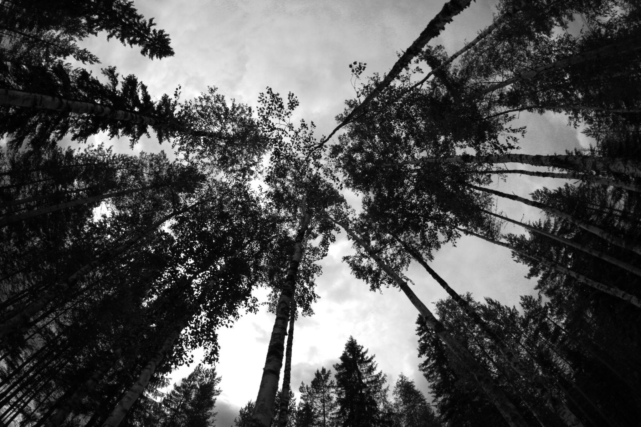 wood by Photos by Johanna Mahlamäki