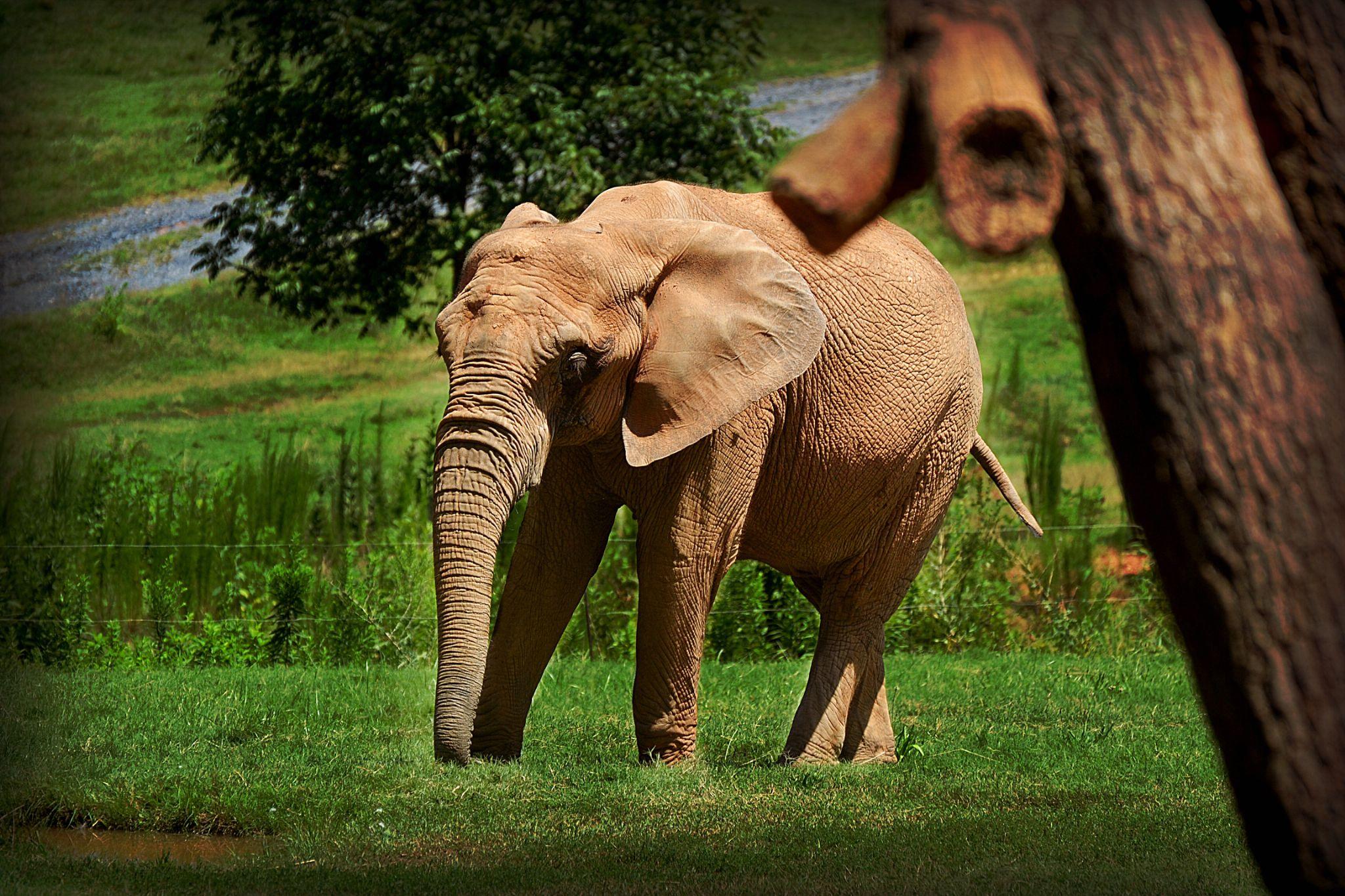 Wondering Elephant by Patricia