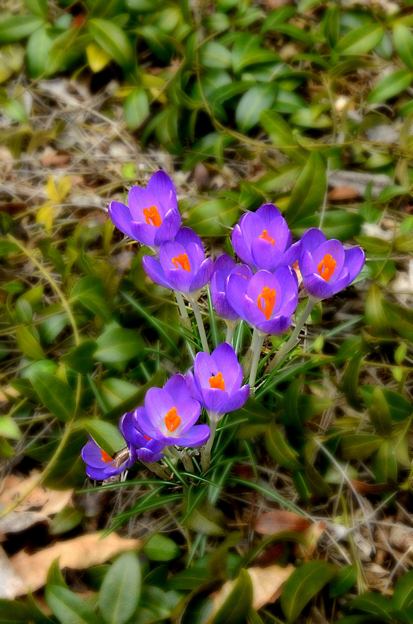 First sign of Spring! by Patricia